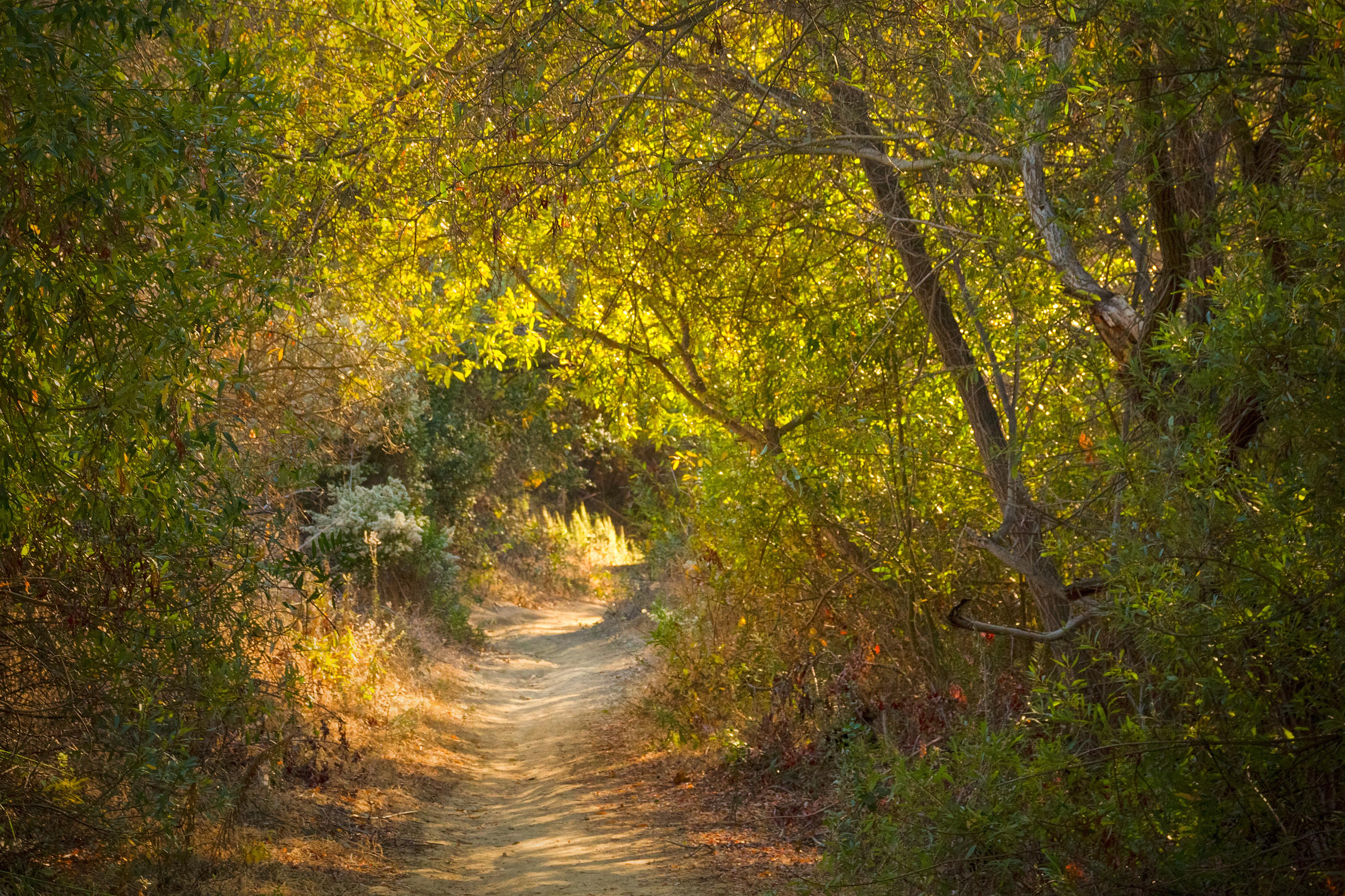 foto de Fond d'écran : lumière du soleil, paysage, tomber, la nature ...