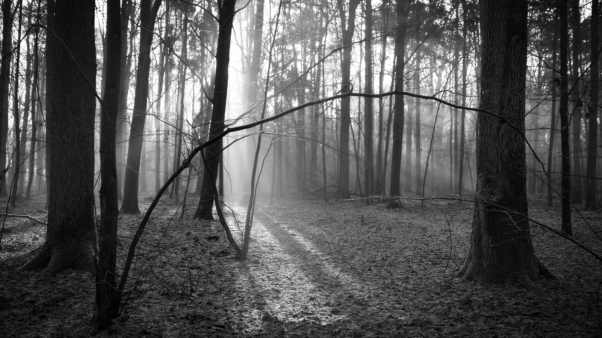 Hintergrundbilder sonnenlicht landschaft wald for Foto hd bianco e nero