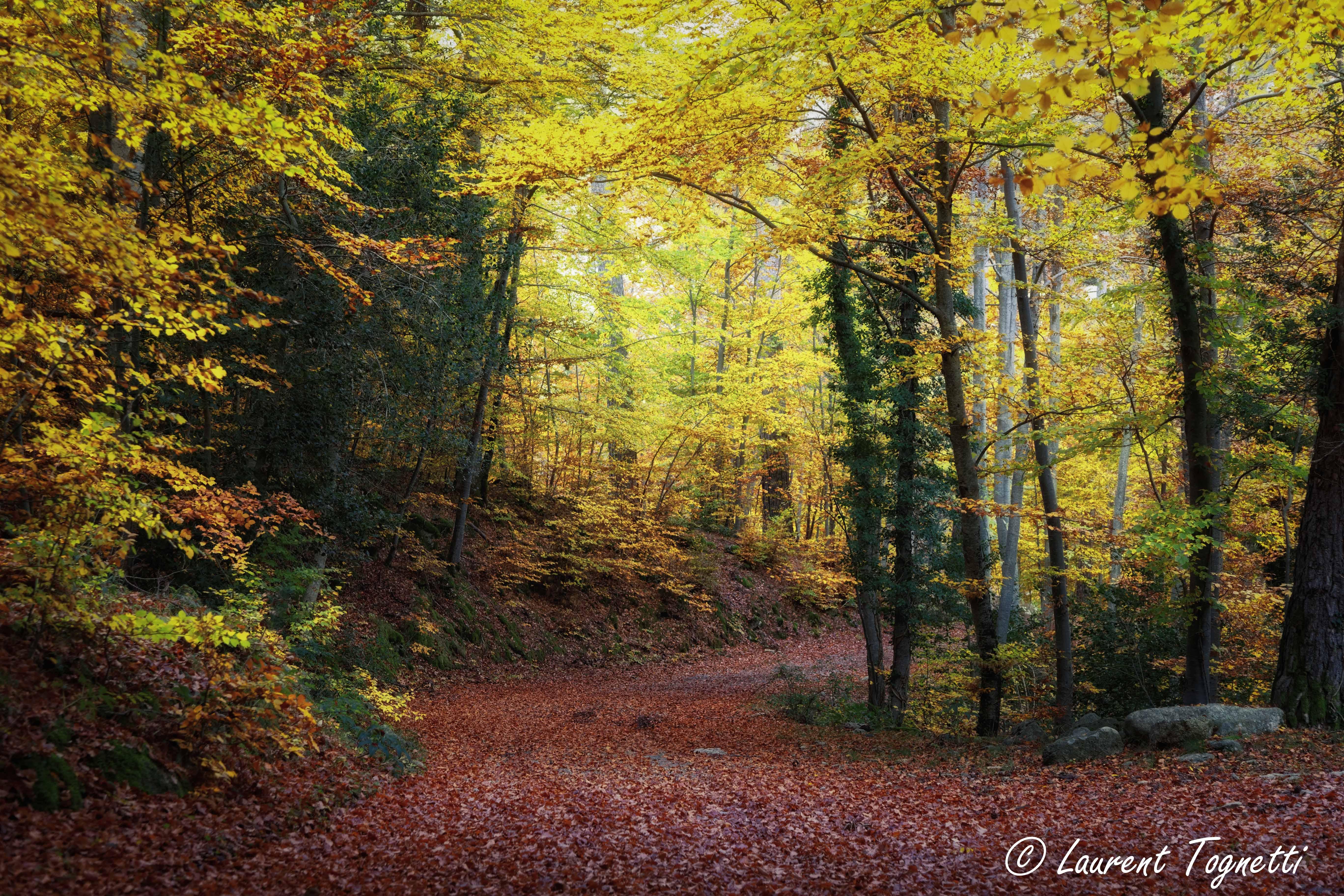 foto de Fond d'écran : lumière du soleil, paysage, la nature, herbe, ciel ...
