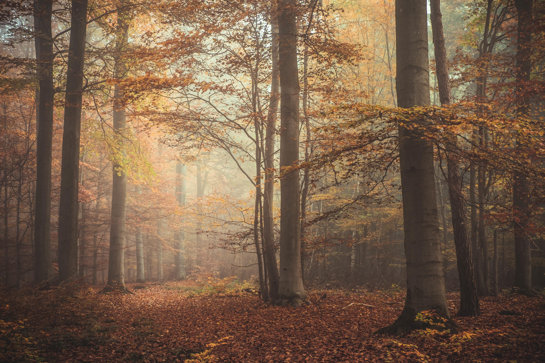 осенний лес фото картинки на рабочий стол