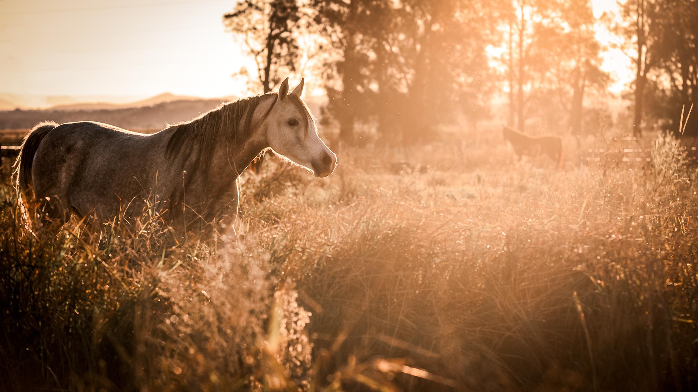 Pferden aus Australien Was sind die Grundlagen während der Datierung