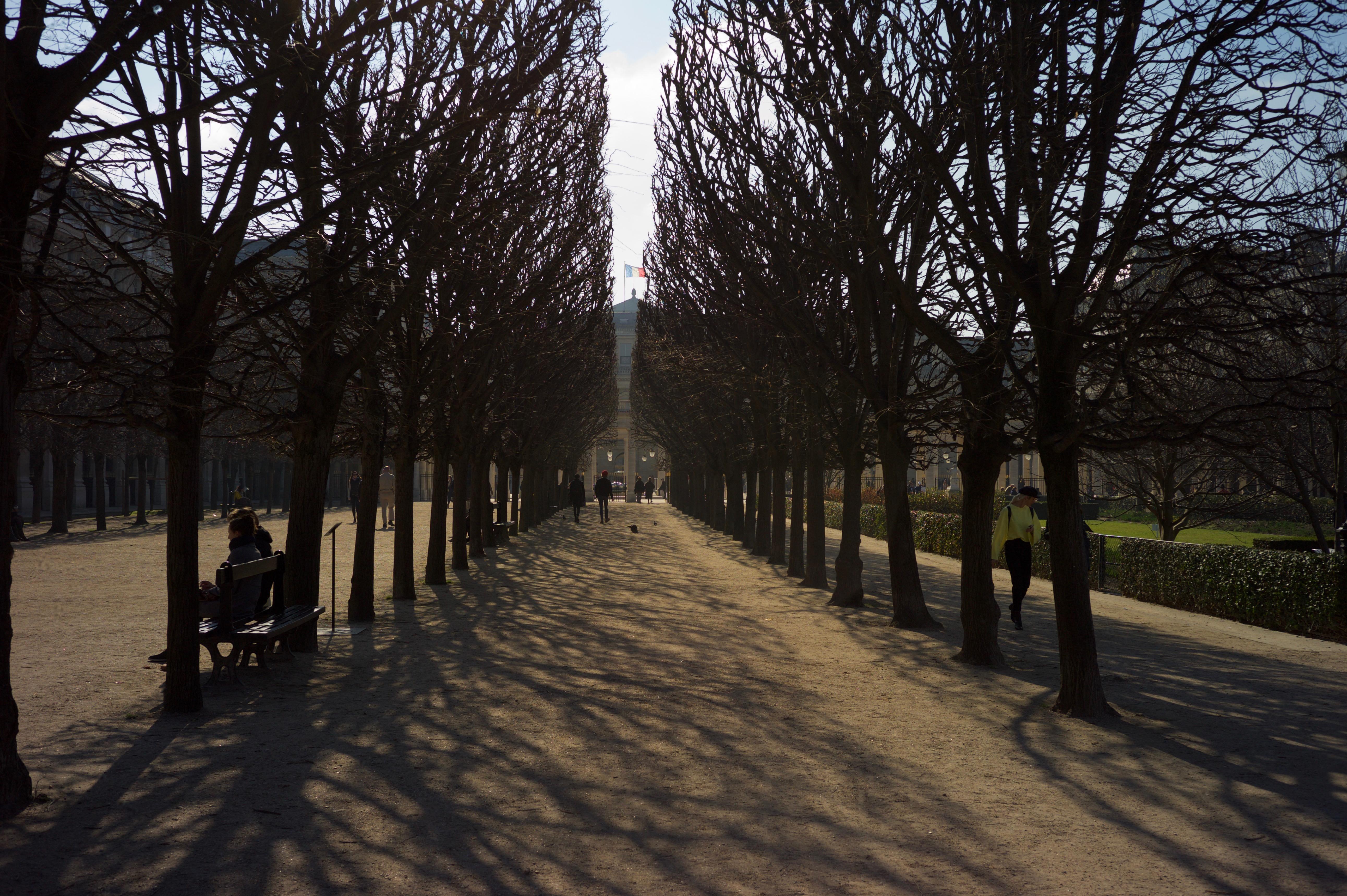 Fond d\'écran : lumière du soleil, paysage, jardin, rue, la ...