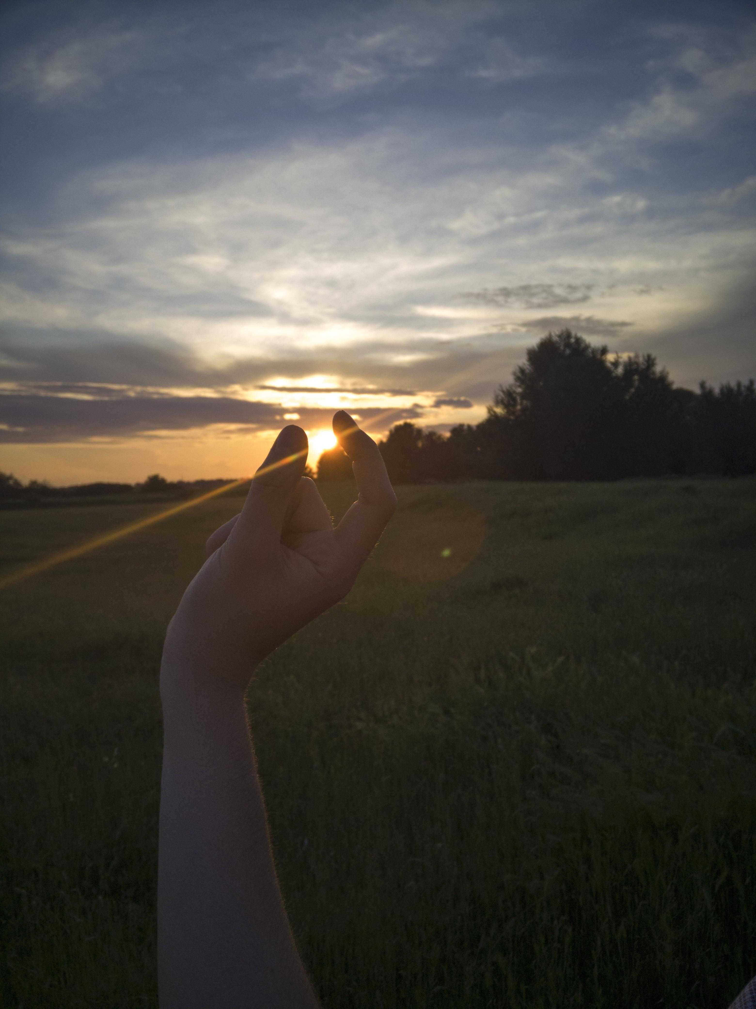 мутант, обычно картинки красивый закат солнца в руках беспородных