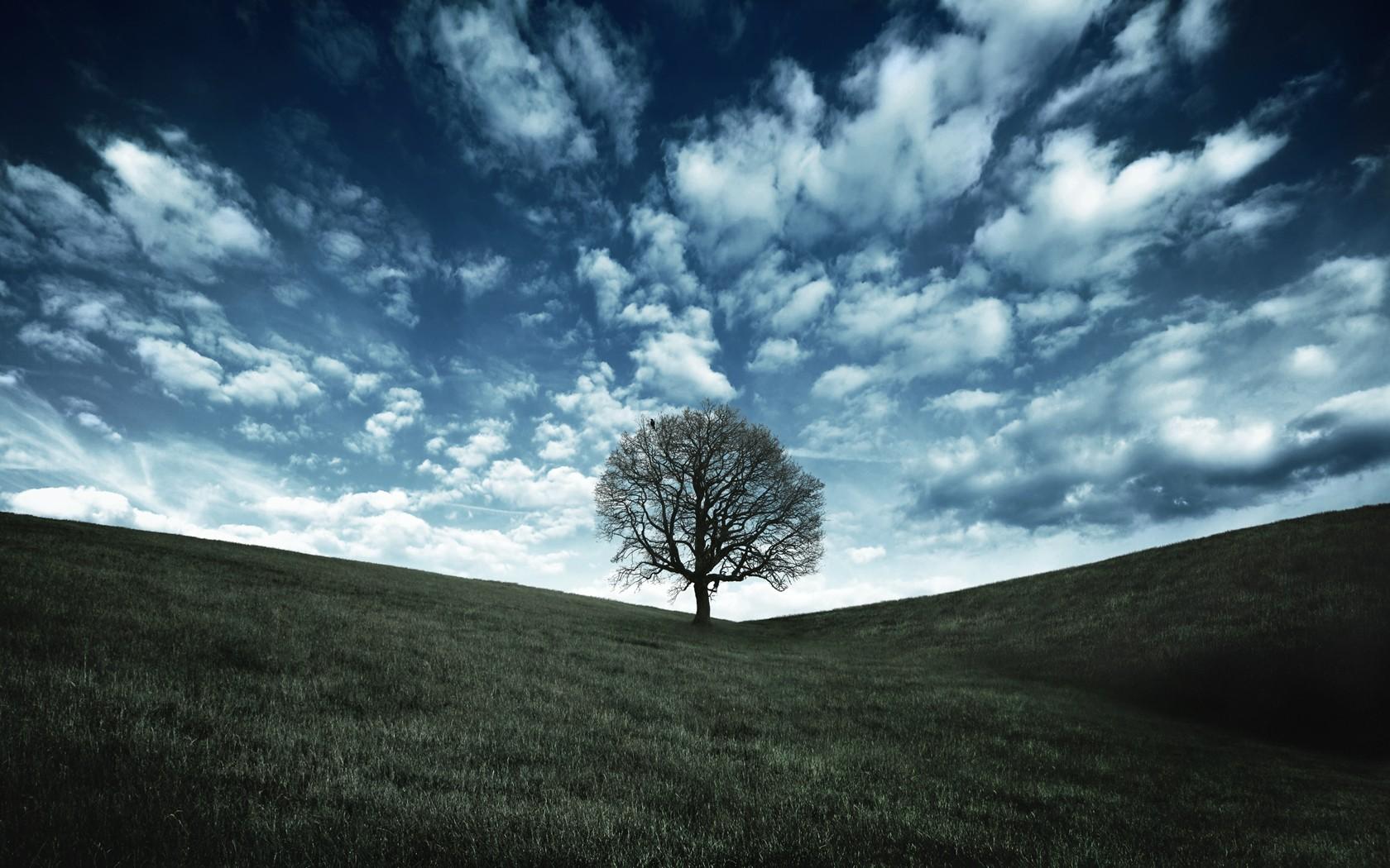 кожи картинки дерево на холме волшебной