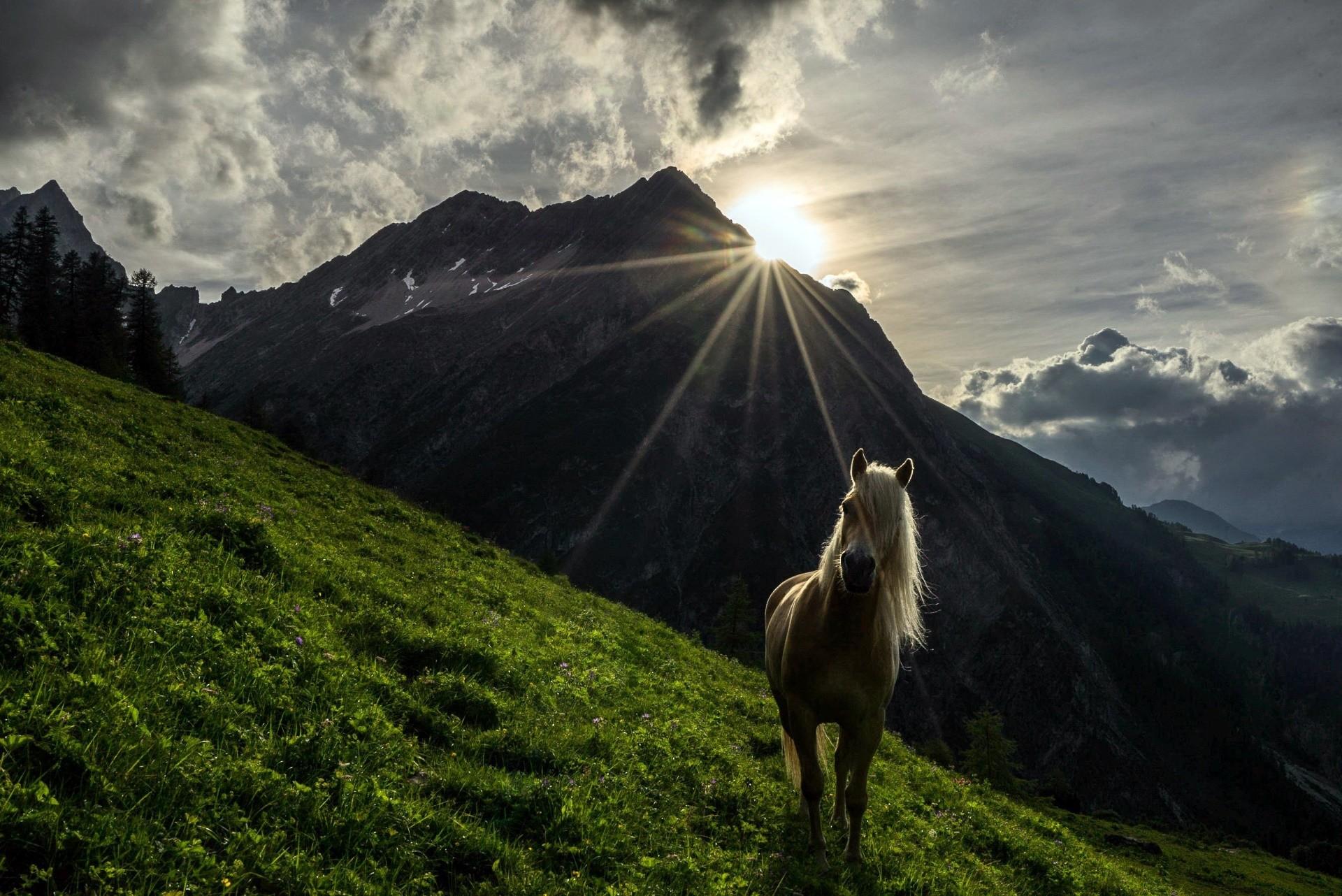 42 Gambar Pemandangan Gunung Dan Hewan Terbaik