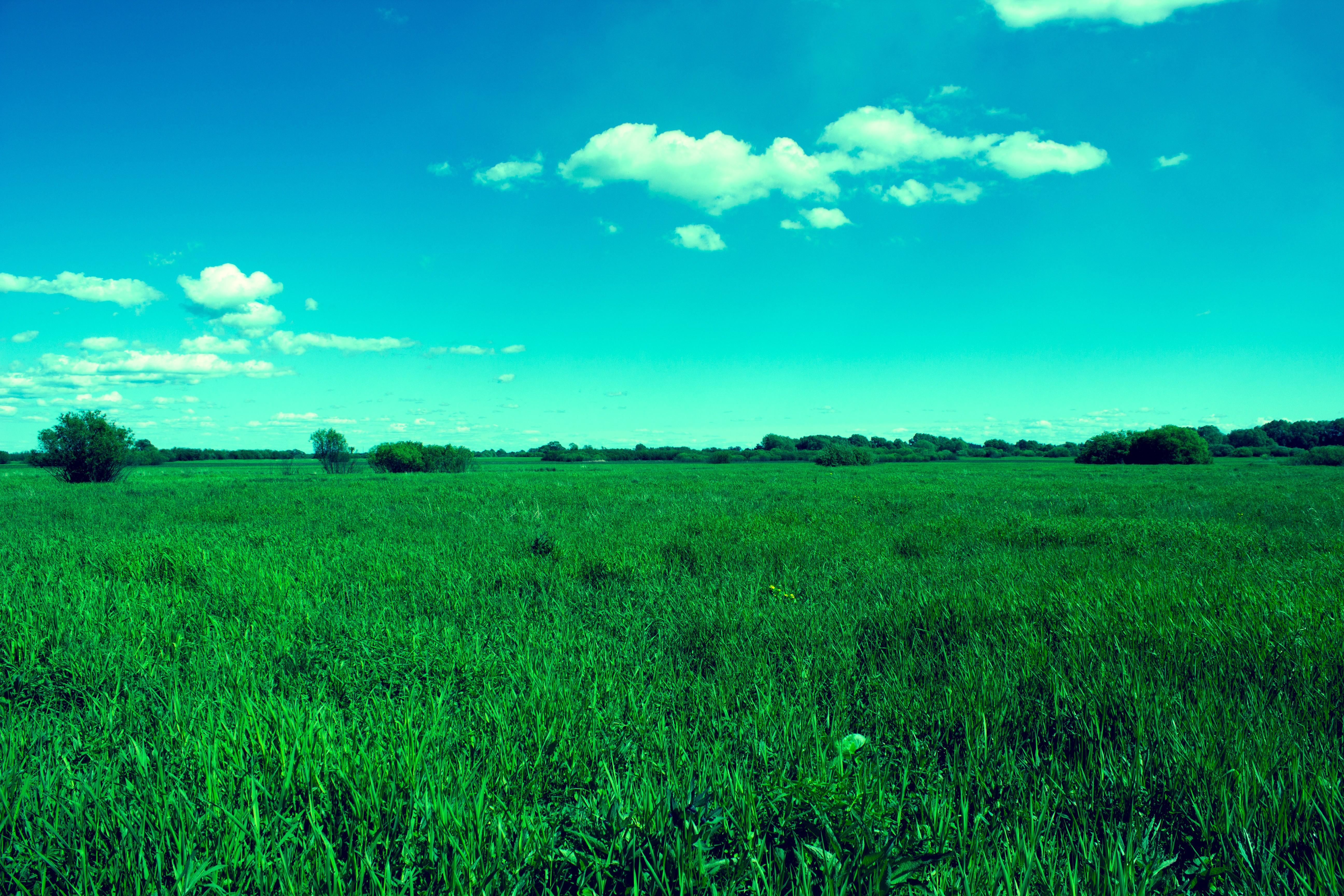 днях картинки с зеленым полем и словом только припаркованные газонах