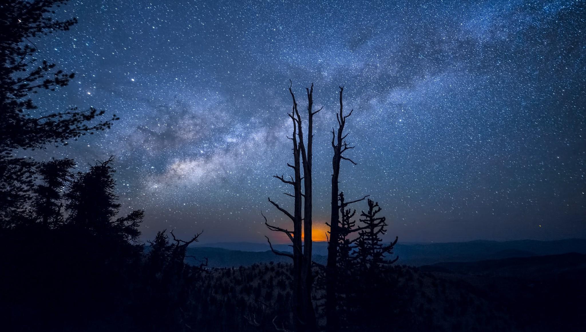 картинки ночное небо и деревья лучшие