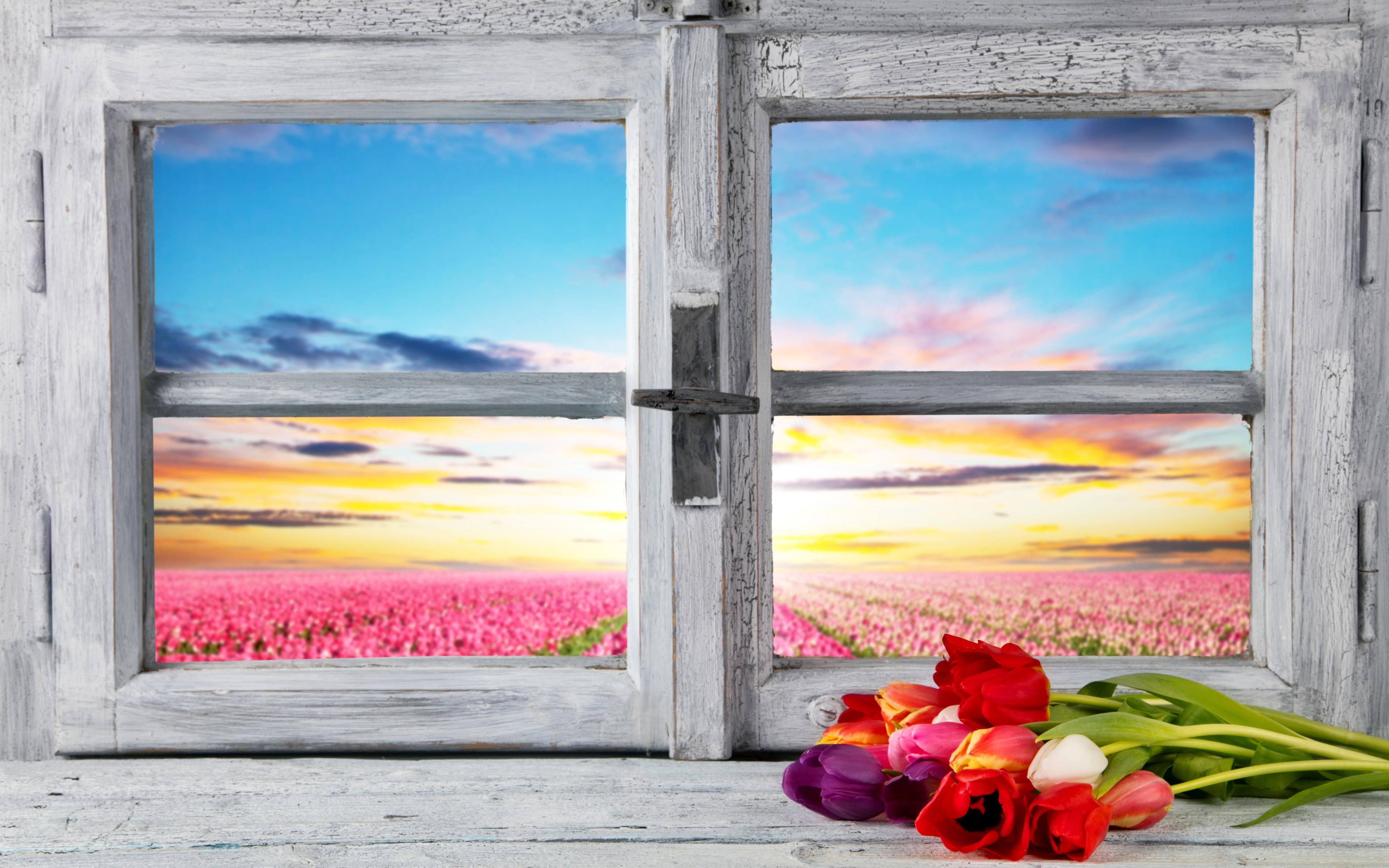 Fondos de pantalla : luz de sol, paisaje, pintura, ventana, Flores ...