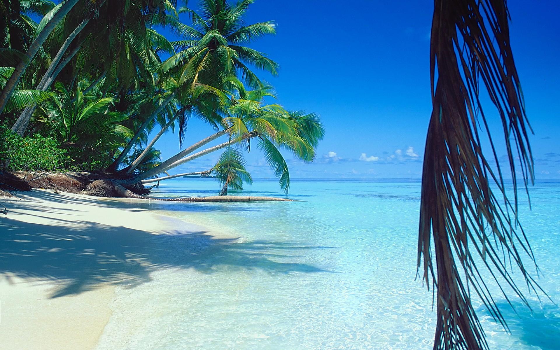 Wallpaper Caribbean Sea Beach Sunset Palm Trees Hd 5k: Fondos De Pantalla : Luz De Sol, Paisaje, Mar, Bahía, Agua