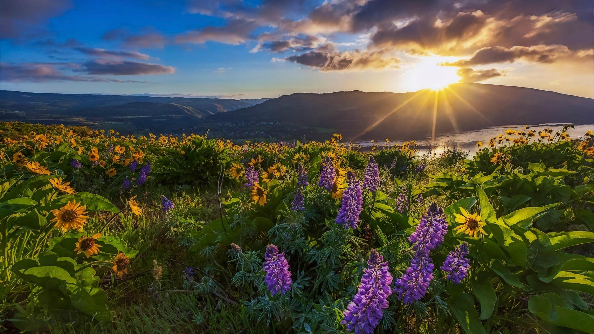Wallpaper Sunlight Landscape Sunset Nature Grass Sky