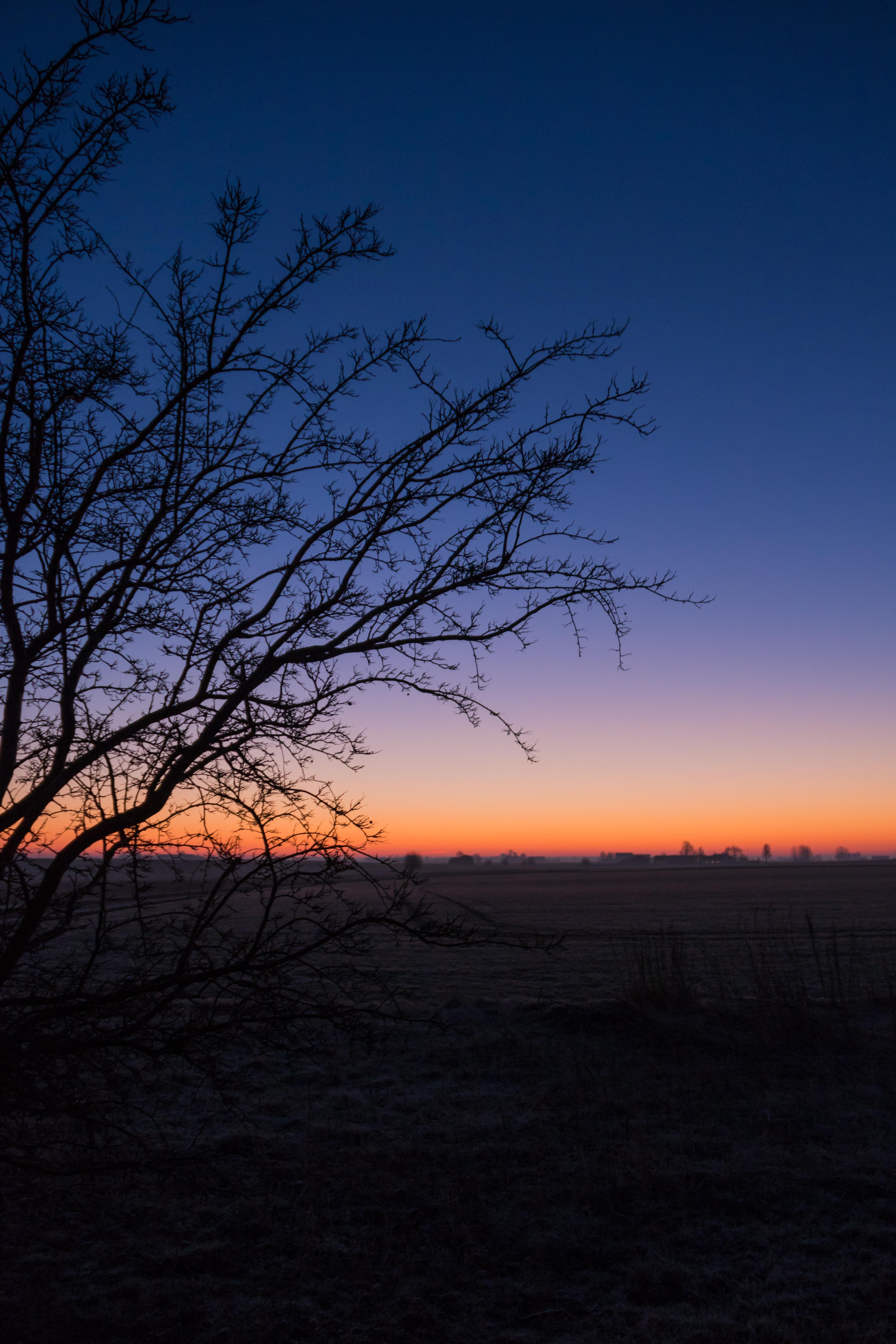 Wallpaper Sunlight Landscape Sunset Nature Sky Branch