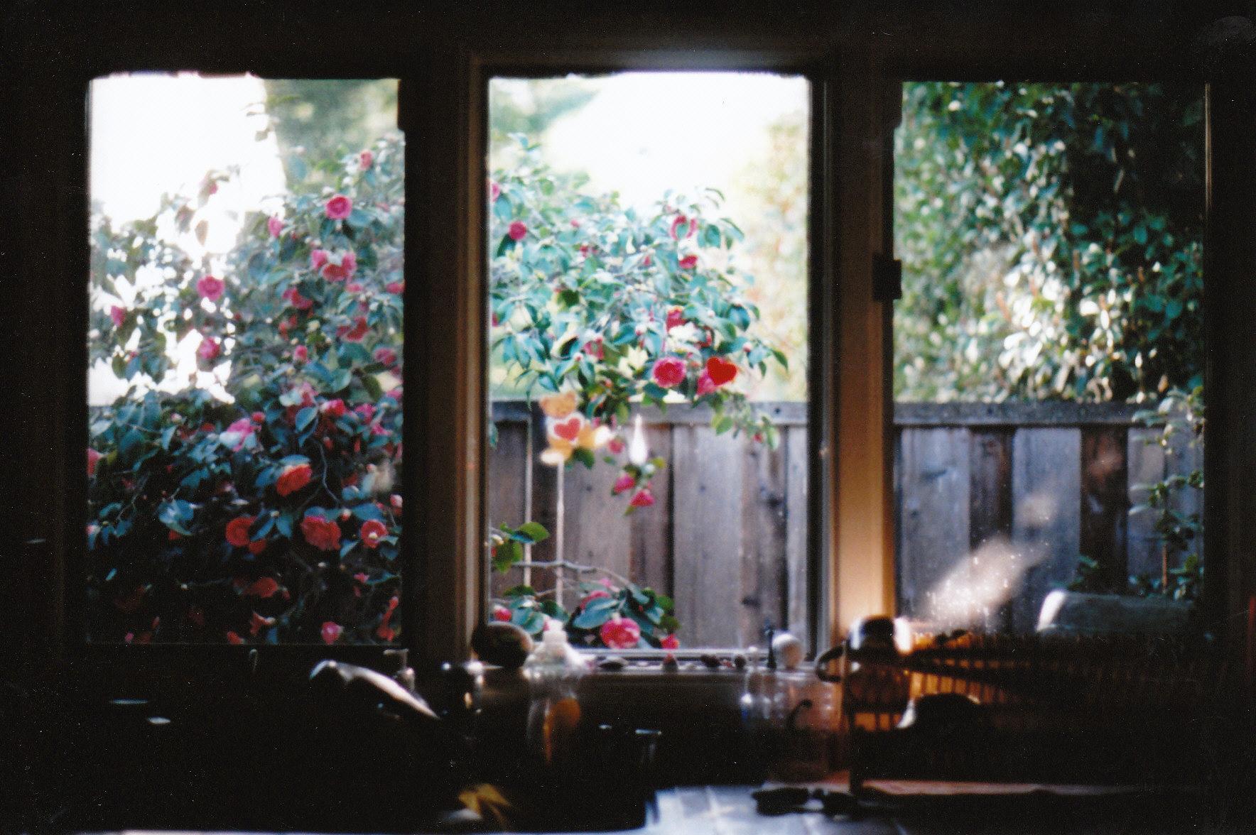 Sfondi luce del sole paesaggio finestra fiori natura - La finestra di fronte film completo ...