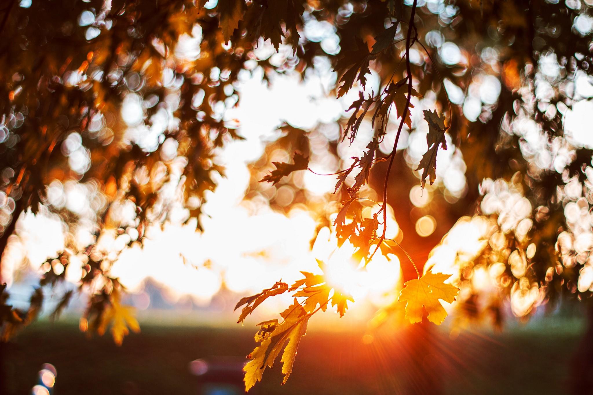 Осенние аллеи в лесах и парках картинки