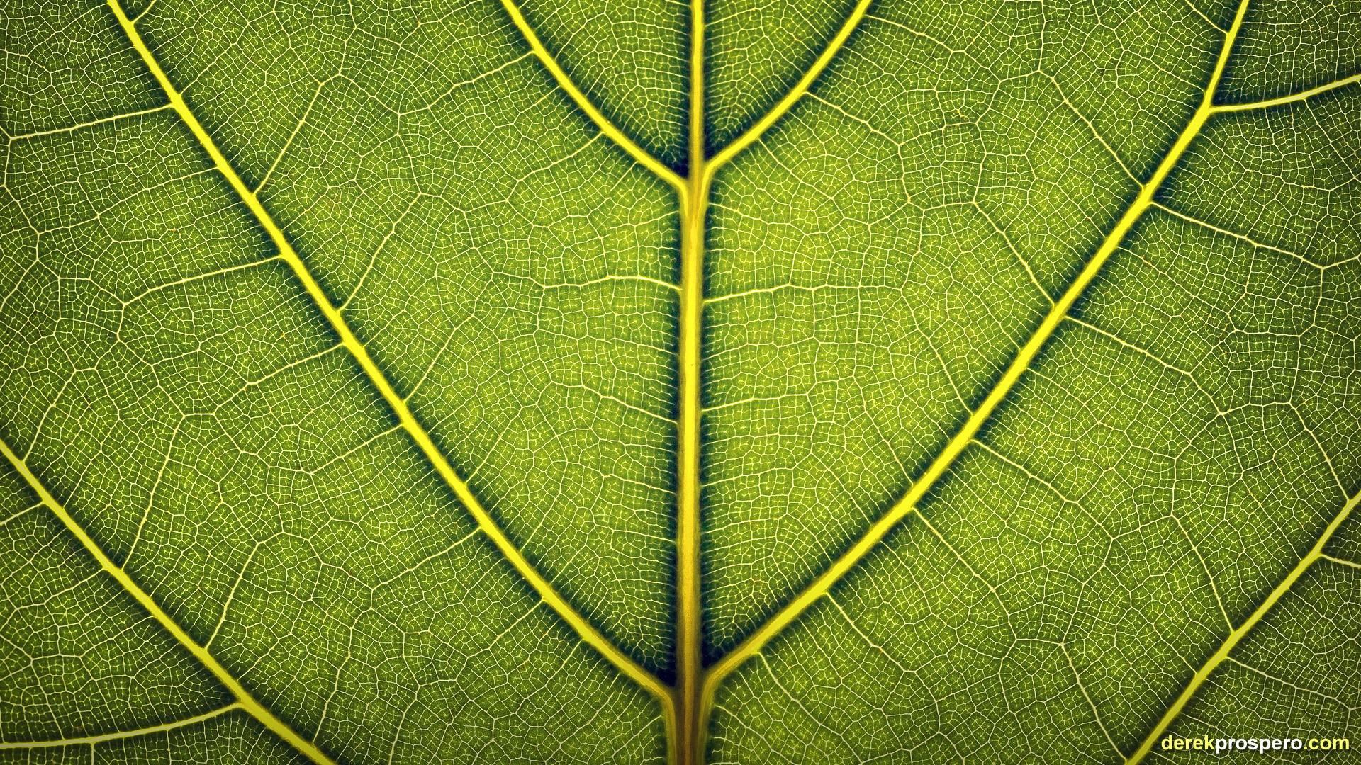Fondos de pantalla : luz de sol, hojas, césped, rama, simetría ...