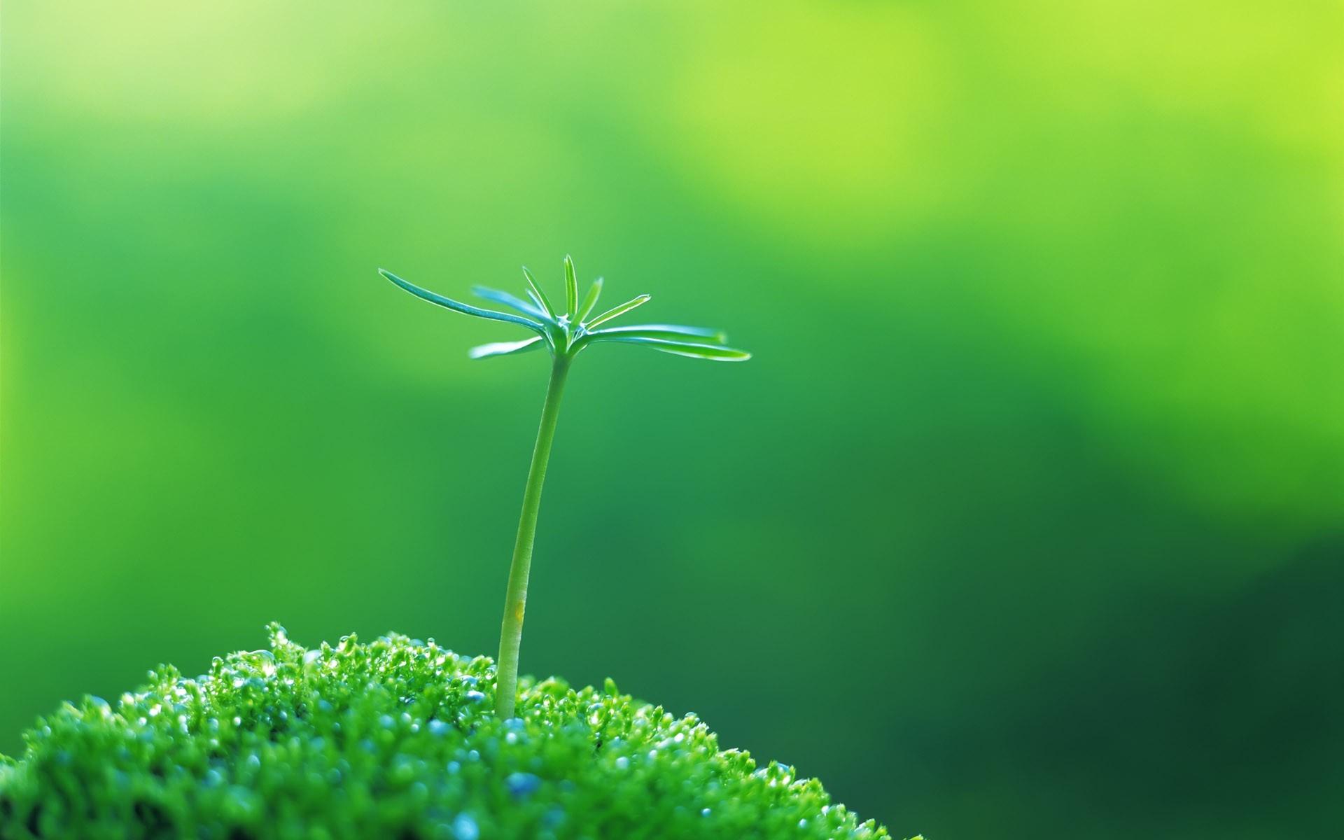 Sfondi Luce Del Sole Le Foglie Natura Piante Ramo Sfondo