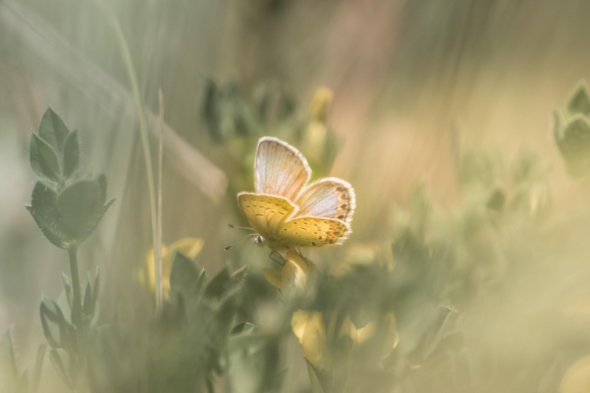Wallpaper Sunlight Leaves Nature Plants Butterfly Green