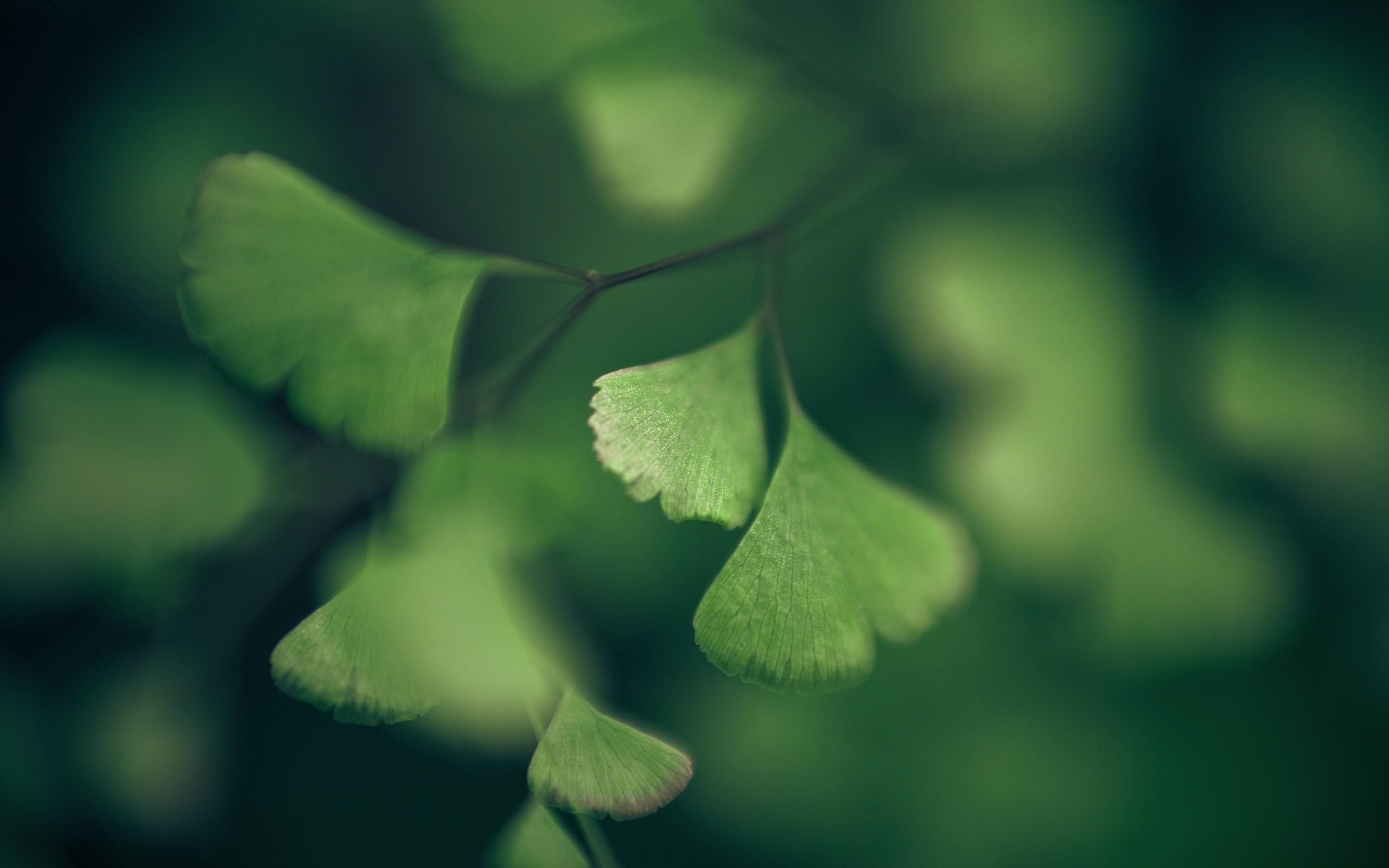 Картинки зеленое на сером