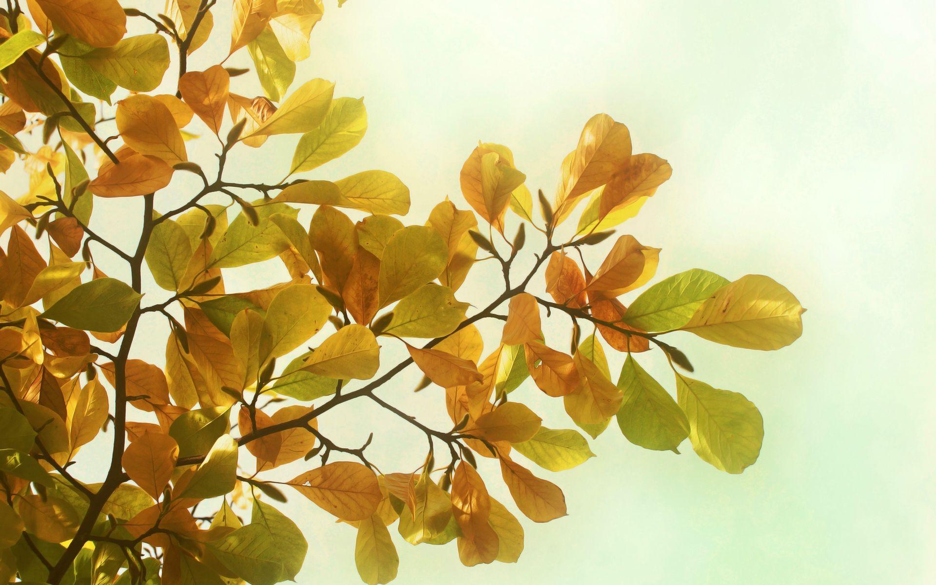 осенние деревья ветка картинки короткий