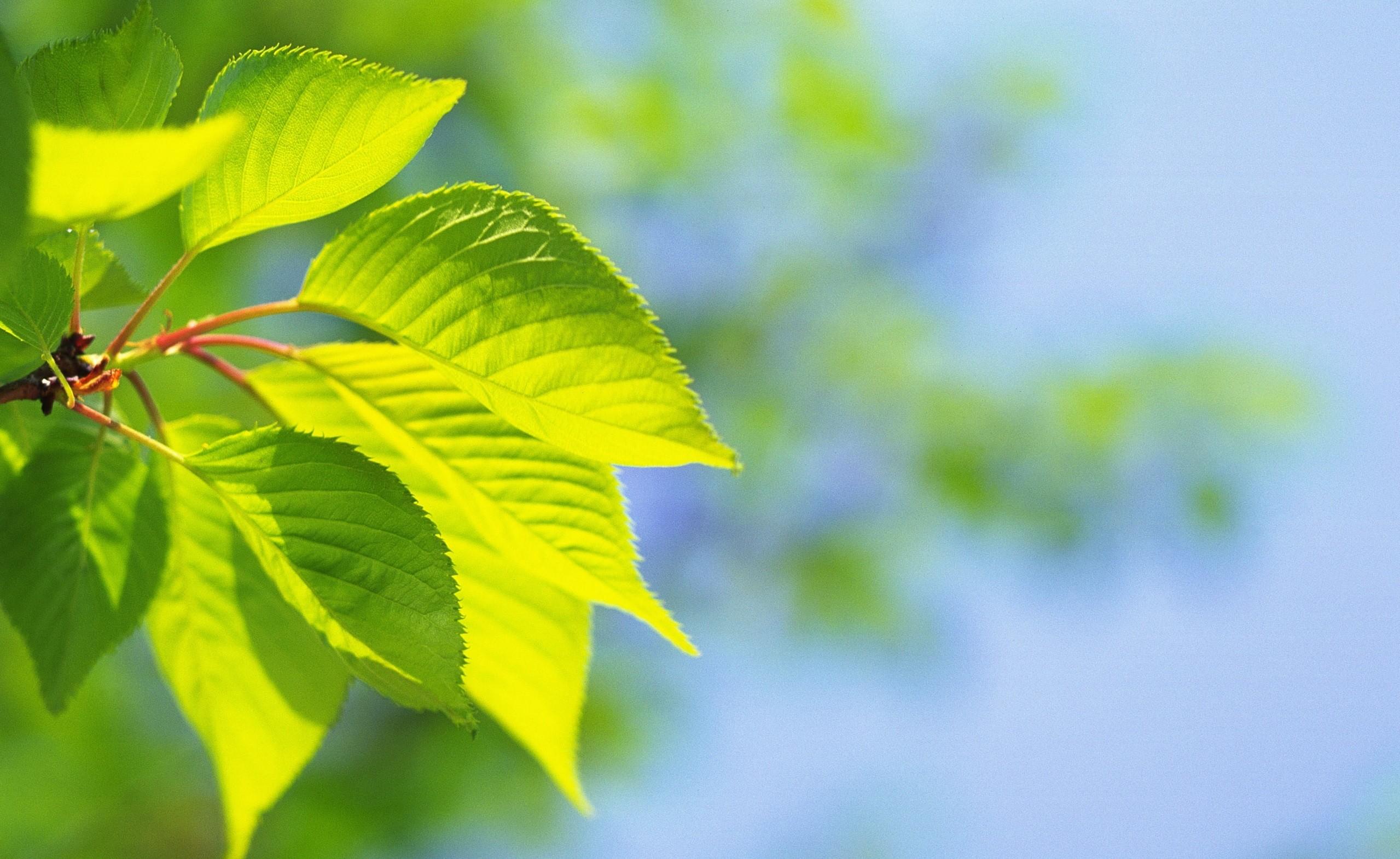 Fondos de pantalla luz de sol hojas naturaleza - Papel pintado ramas arbol ...