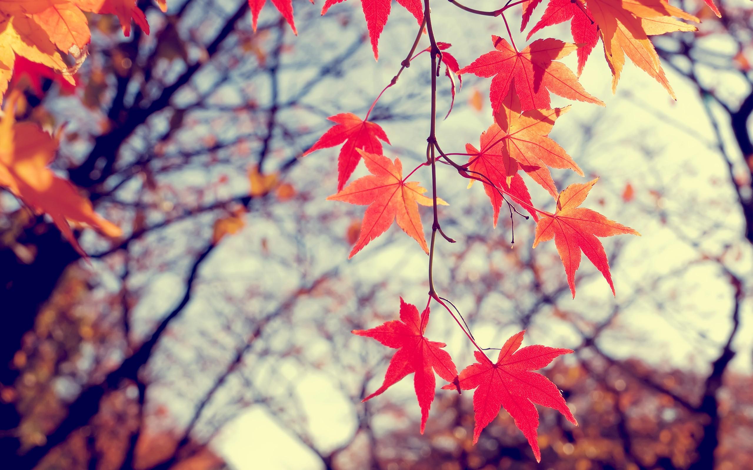 Wallpaper Sunlight Leaves Nature Red Branch Blossom