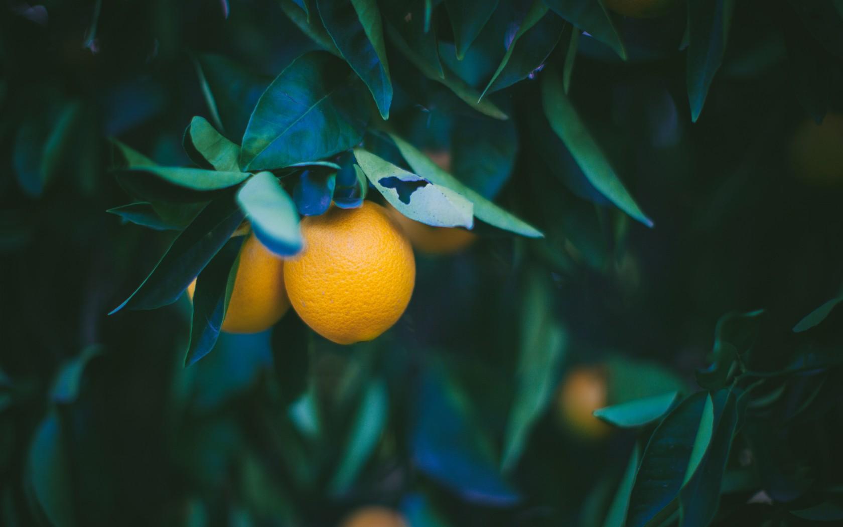 Hintergrundbilder : Sonnenlicht, Blätter, Betrachtung, Fisch, Frucht ...