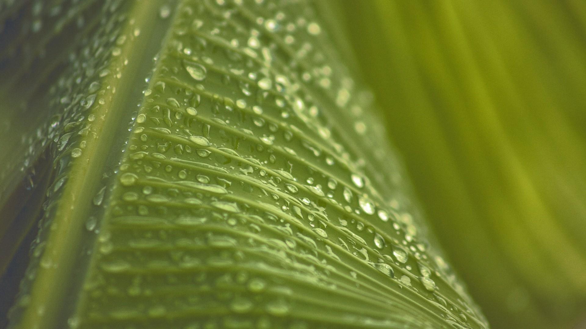 карта макро фото листьев чего сделать необычные