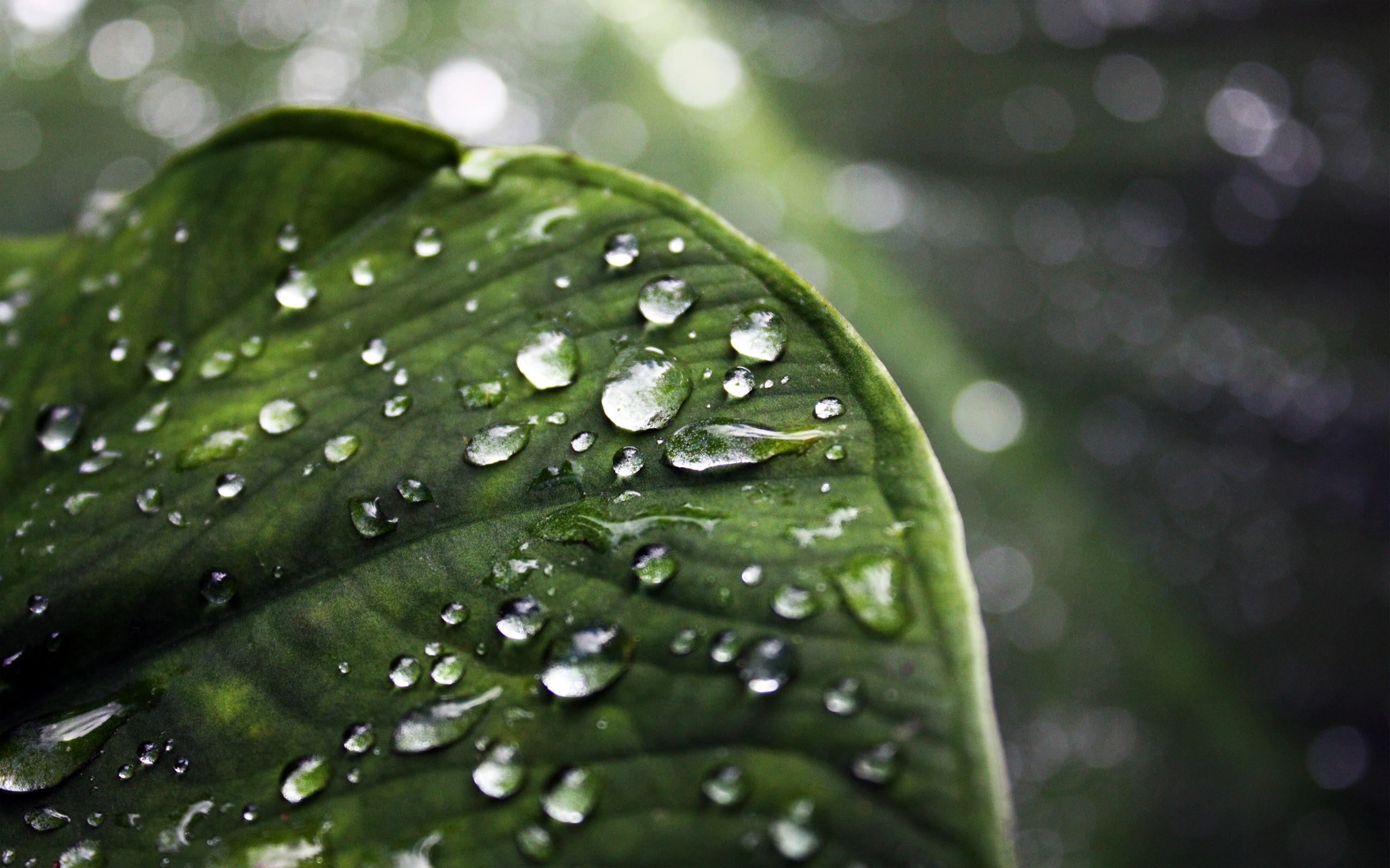 Sunlight Leaves Water Nature Drops Macro Green Dew Leaf Flower Plant Drop Flora 2560x1600 Px