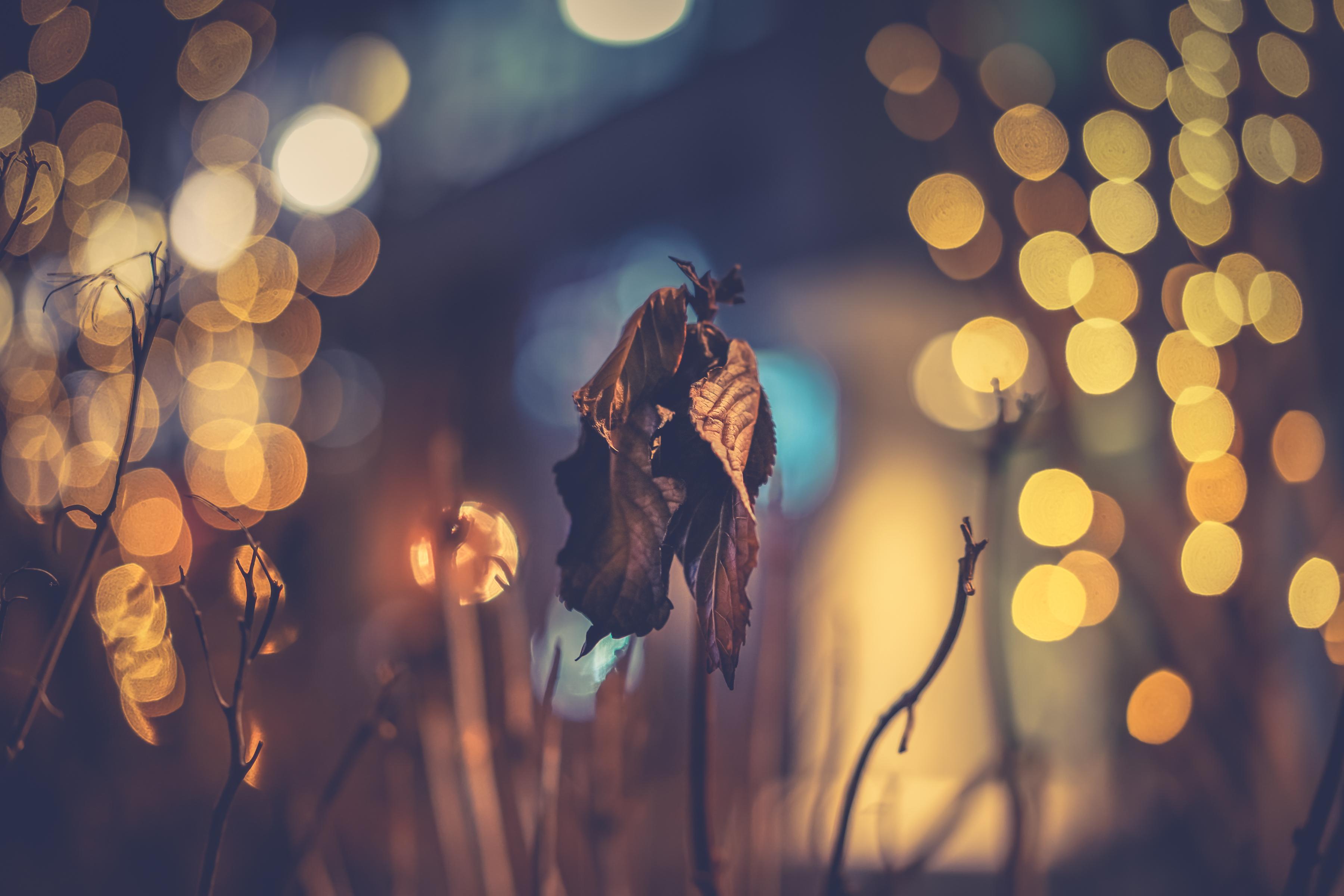 Fondos de pantalla : luz de sol, luces, hojas, noche, naturaleza ...