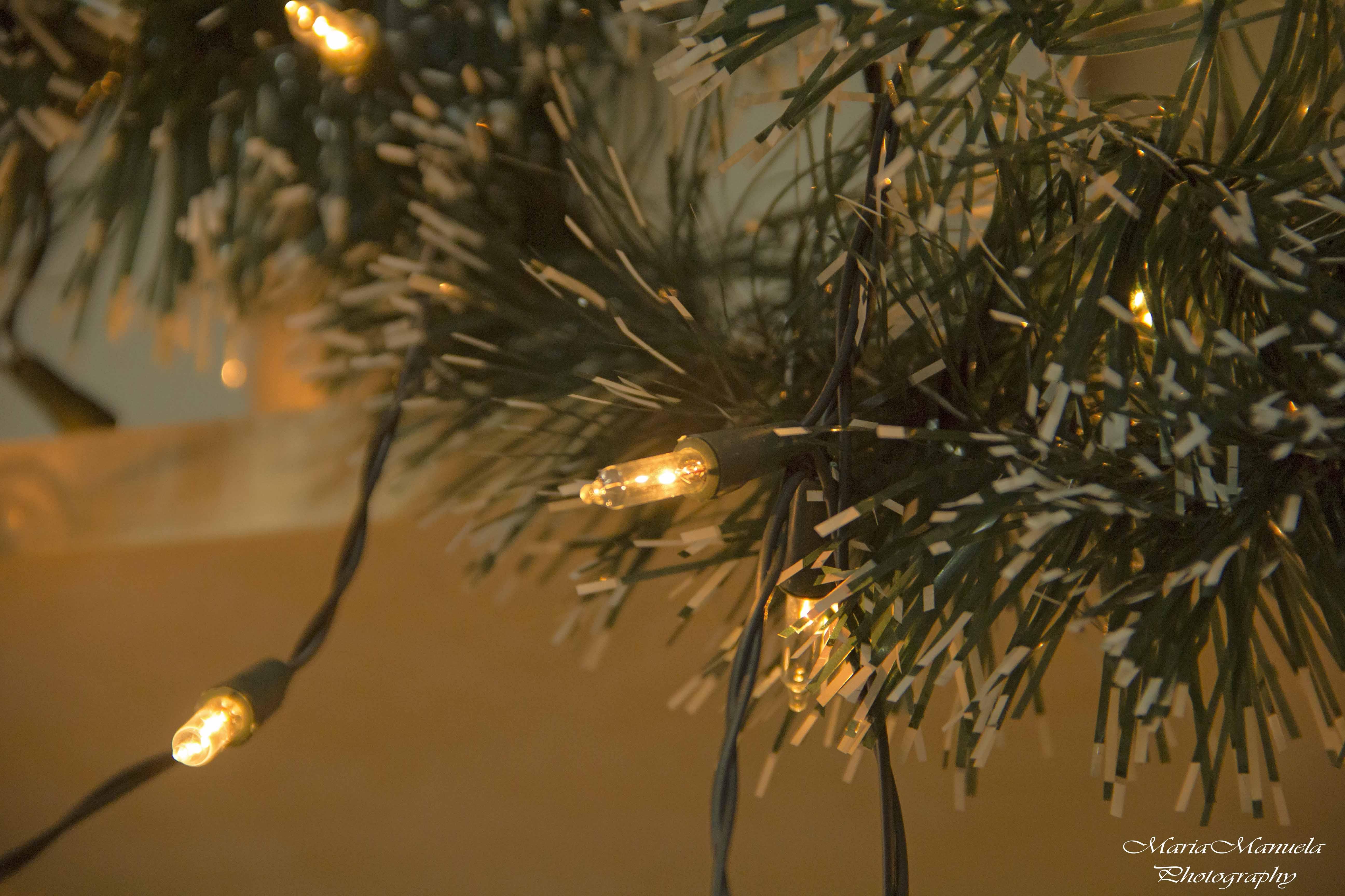 foto de Wallpaper : sunlight, lights, photography, closeup, branch ...