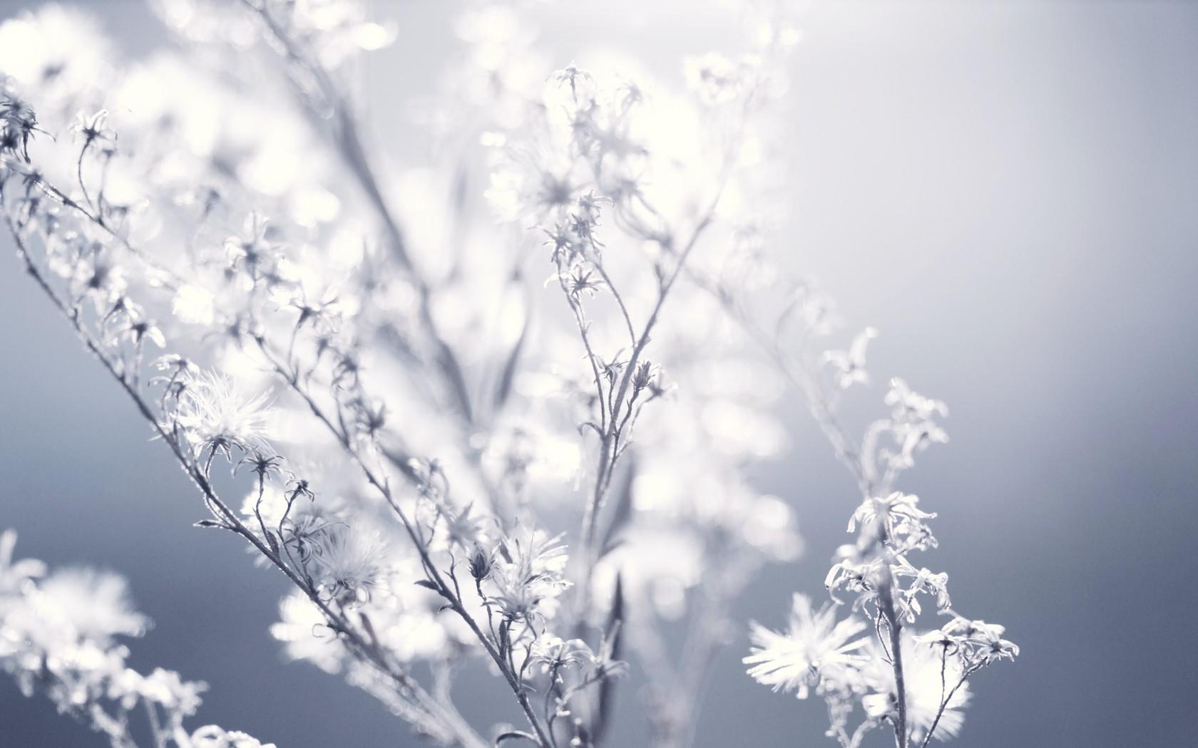 hintergrundbilder sonnenlicht einfarbig blumen wasser natur himmel pflanzen schnee. Black Bedroom Furniture Sets. Home Design Ideas