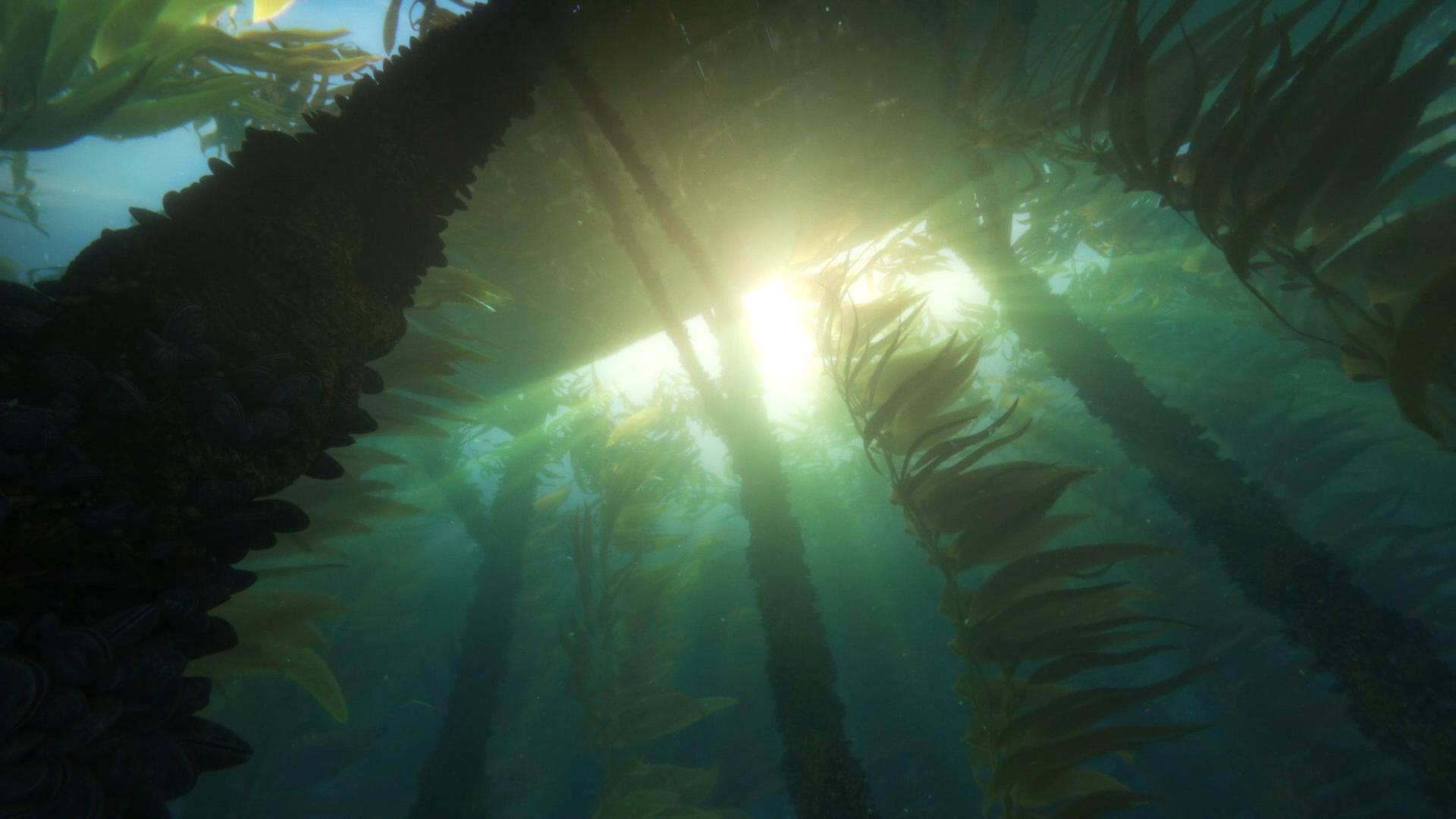 обои солнечный лучик кино подводный анимационные фильмы