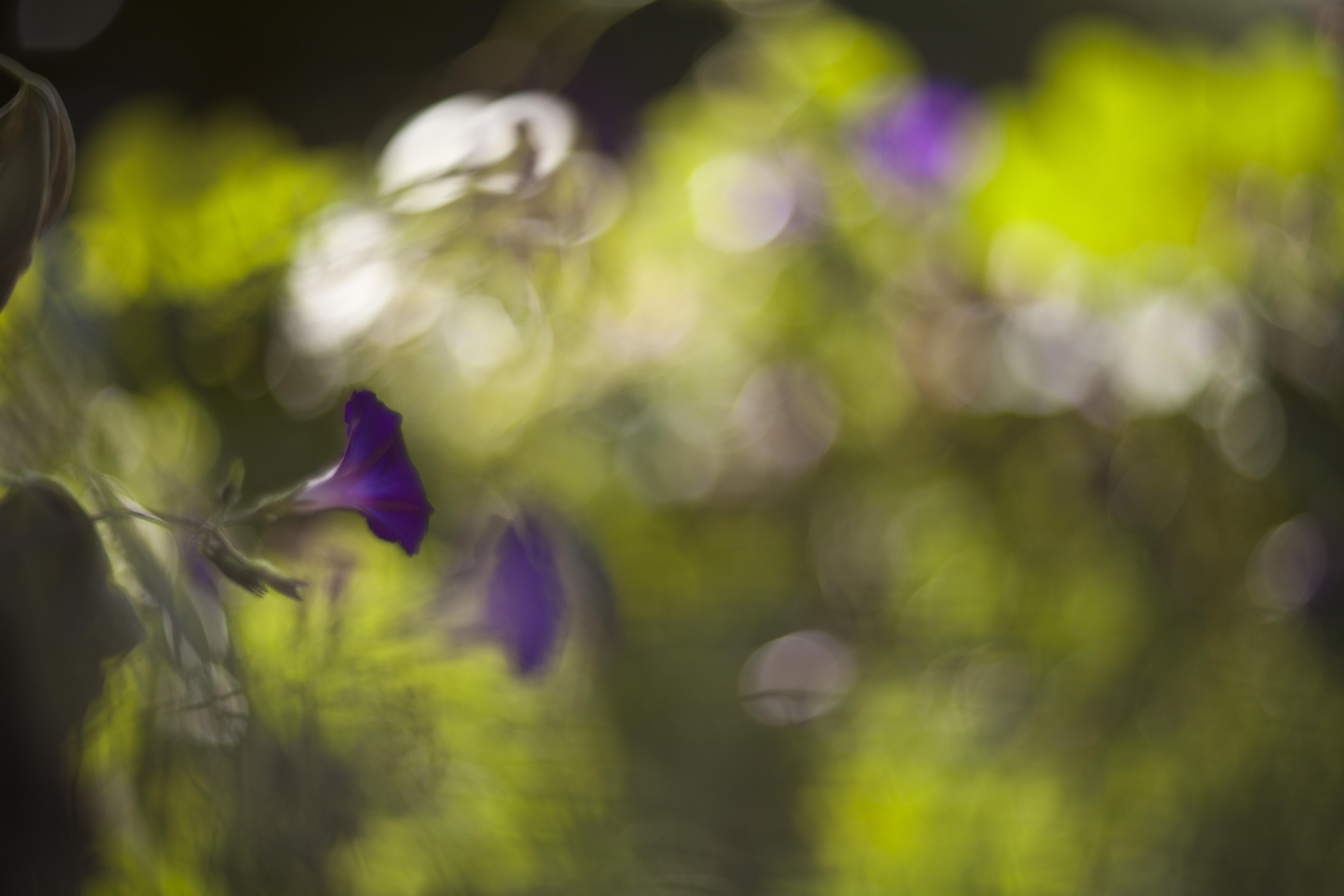 Sfondi Luce Del Sole Natura Ramo Giallo Mattina Bicchiere