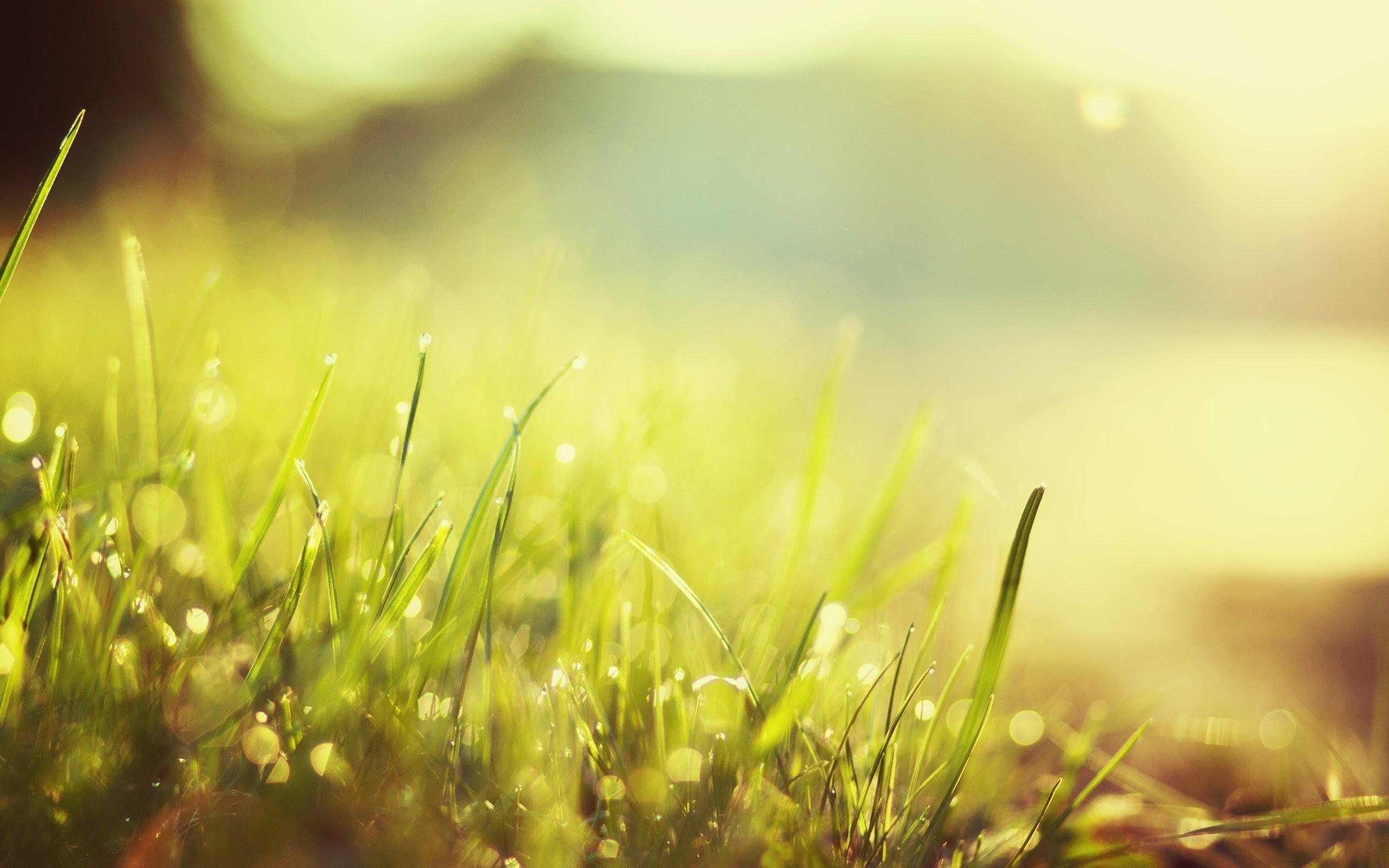 Картинка утро трава природа