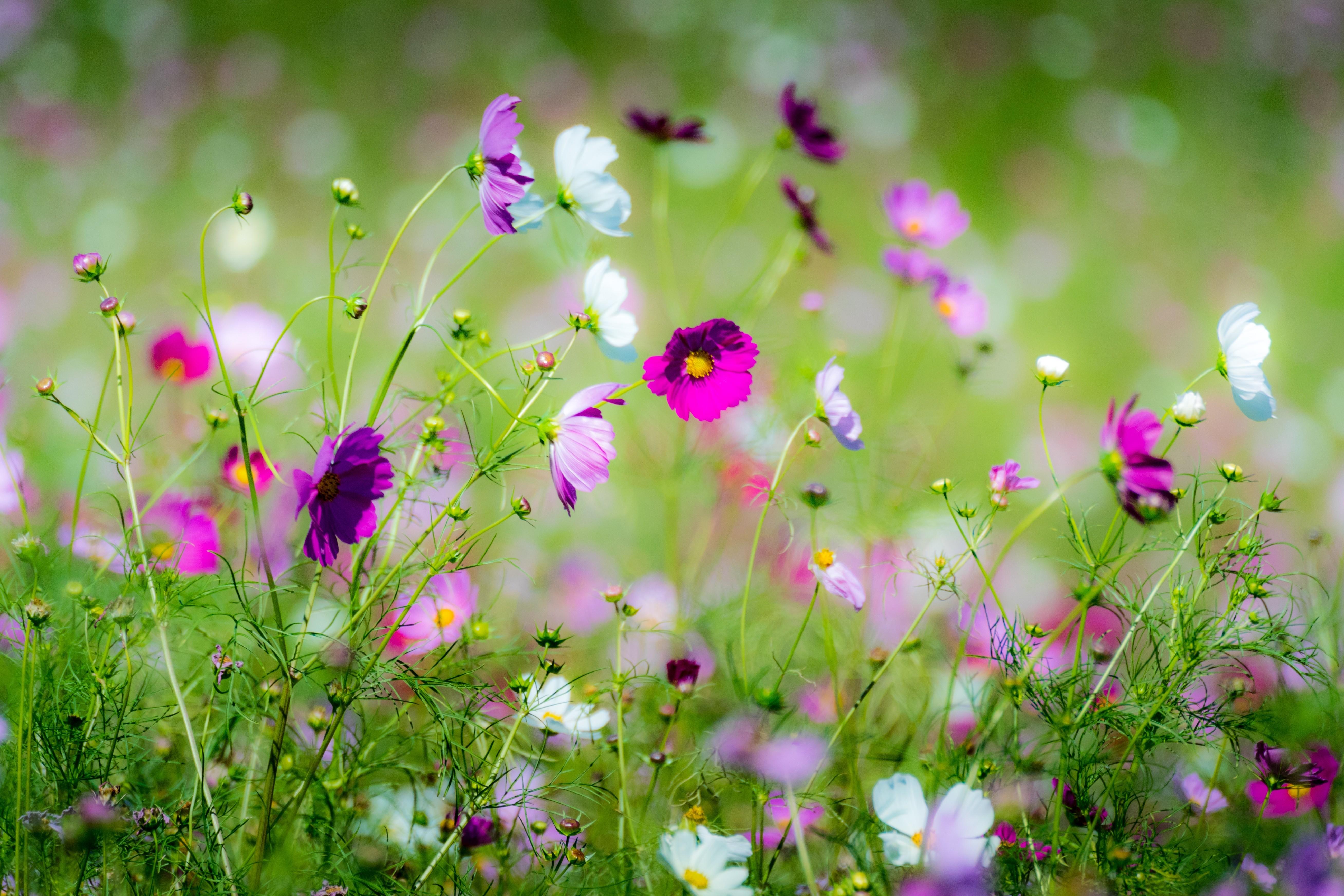фото цветов в траве