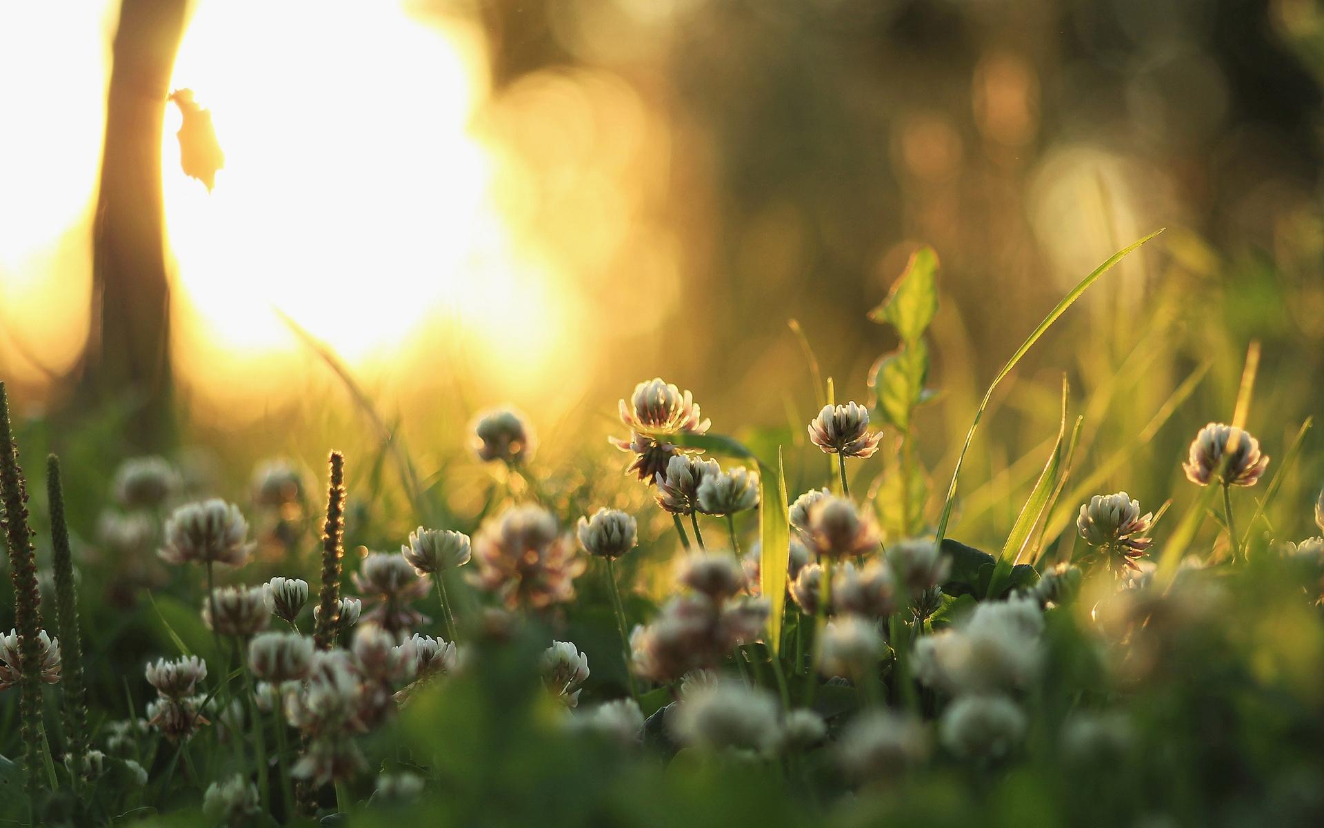 молодая открытки фото с добрым утром природа тут поджидаю