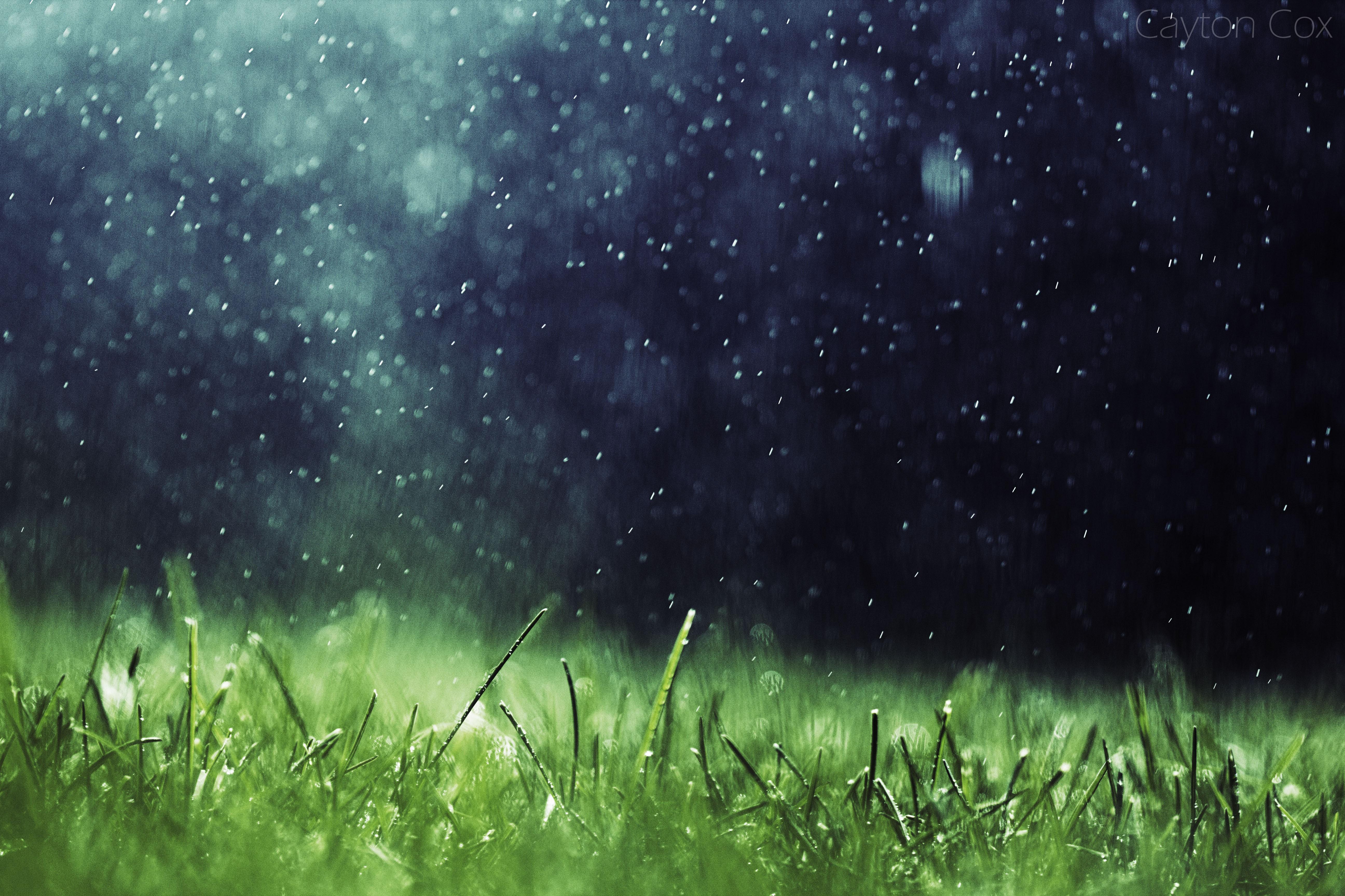 デスクトップ壁紙 日光 自然 草 雨 アートワーク 緑 雰囲気