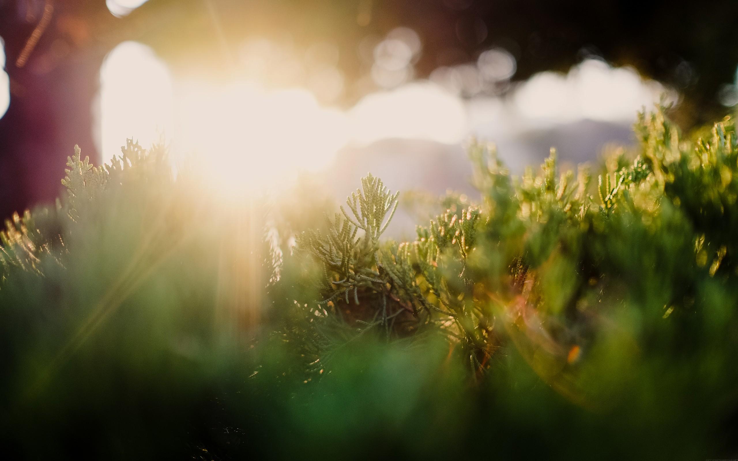 лучи солнца на траве картинки изделия уверенно