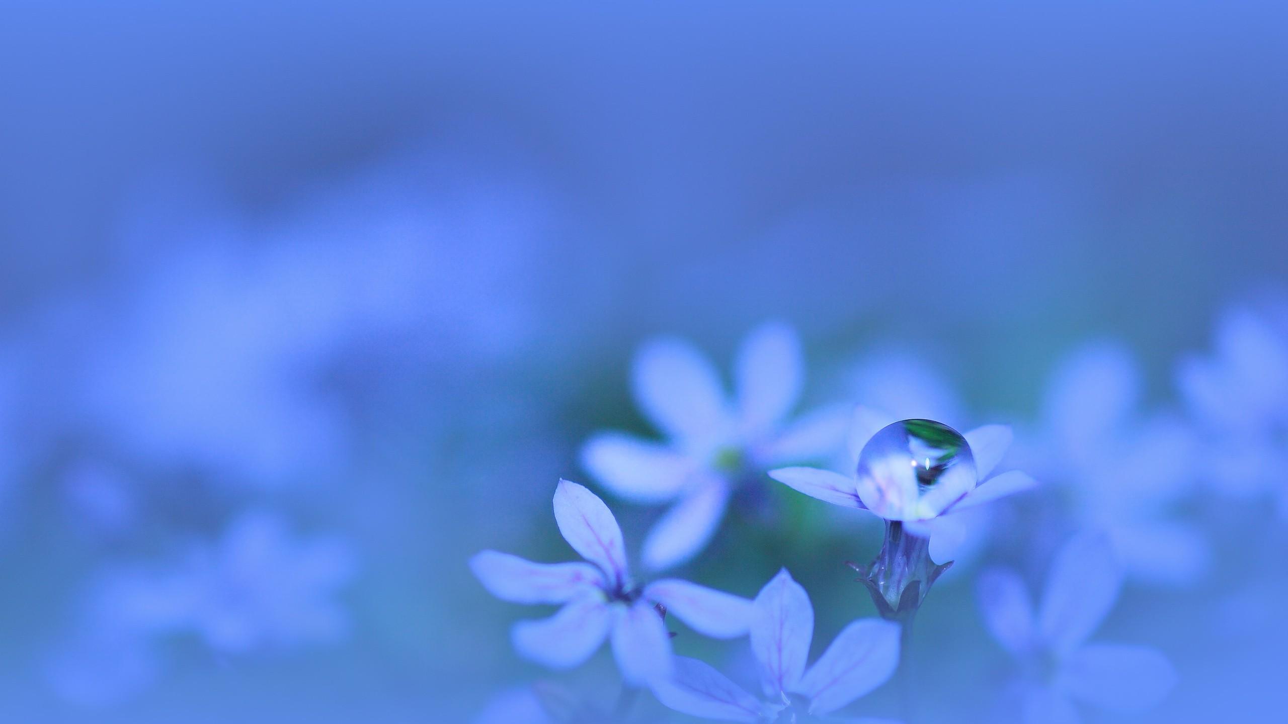 デスクトップ壁紙 日光 自然 空 写真 水滴 青 工場 フローラ