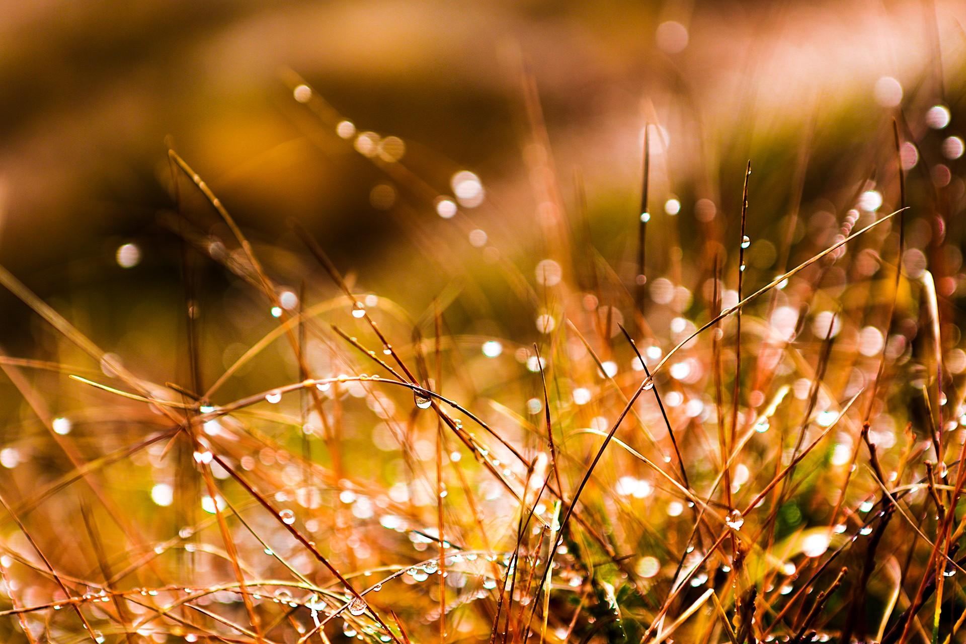 идей, как картинки роса и солнце полноты картины некоторые