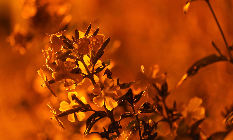 デスクトップ壁紙 日光 夜 空 ブランチ 黄 イブニング 朝