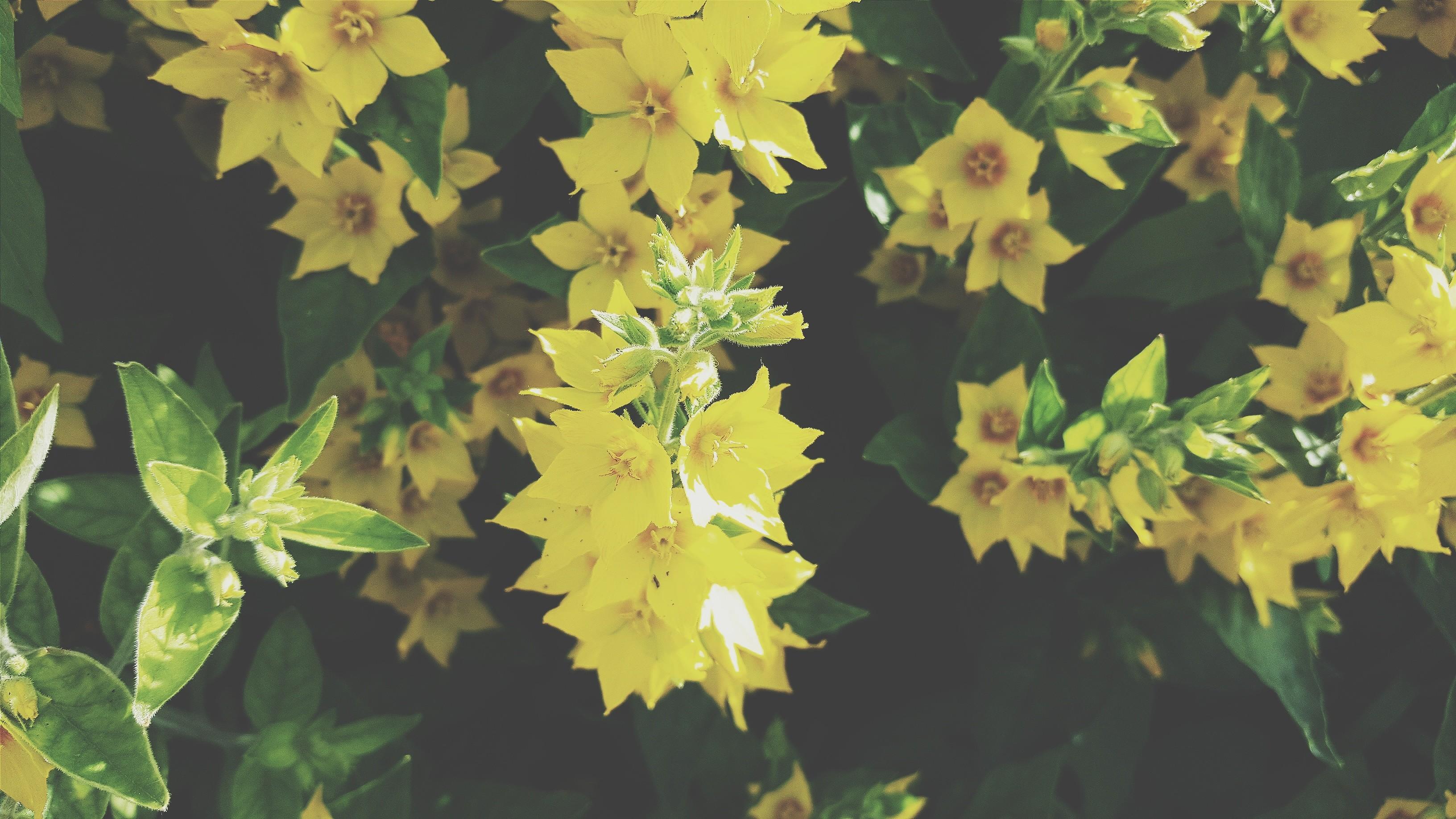 Sonnenlicht Pflanzen Ast Grün Gelb Baum Herbst Blatt Blume Pflanze Jahreszeit Flora produzieren Botanik Landanlage blühende