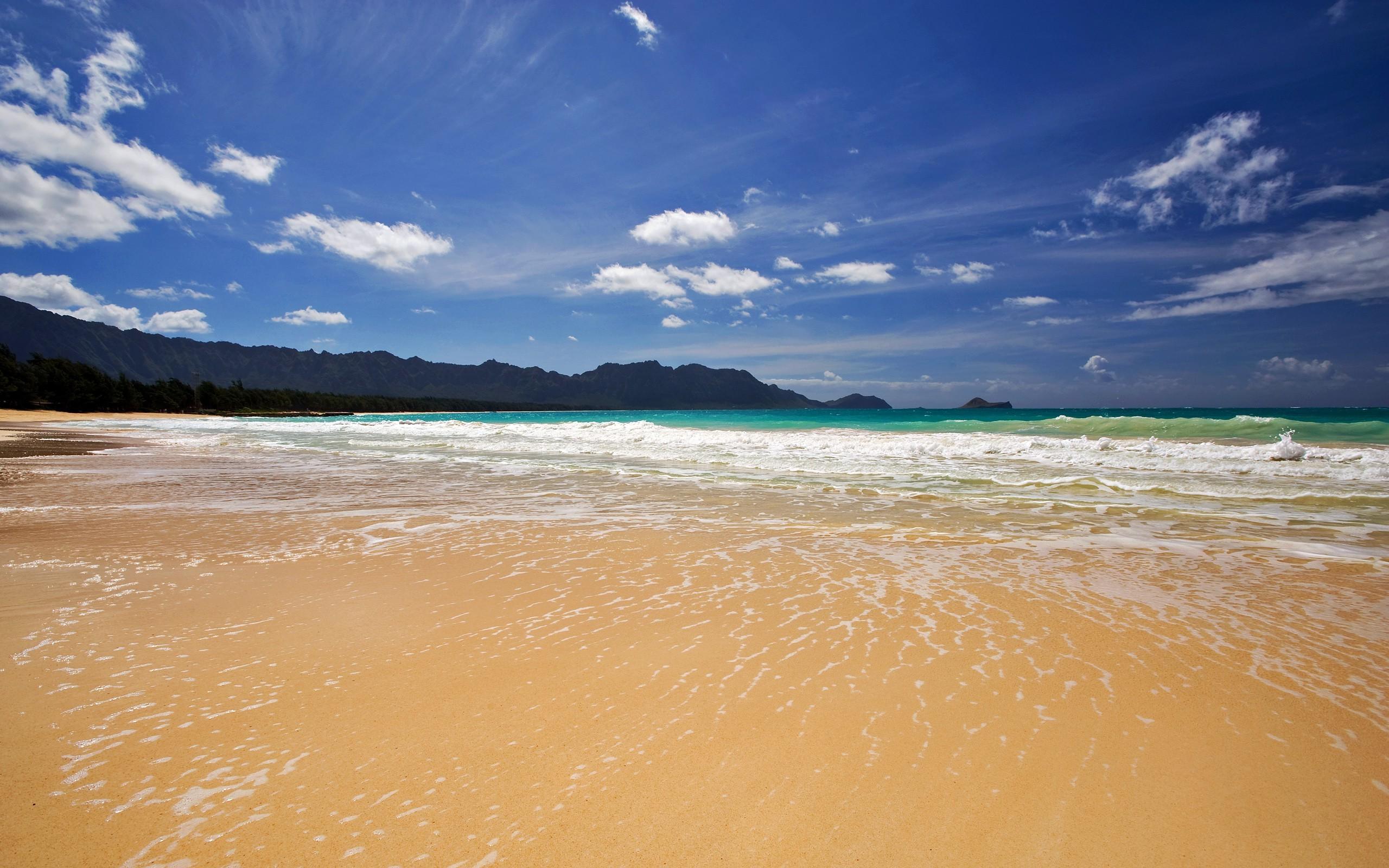 картинки песчаного берега и океана цветов цитруса