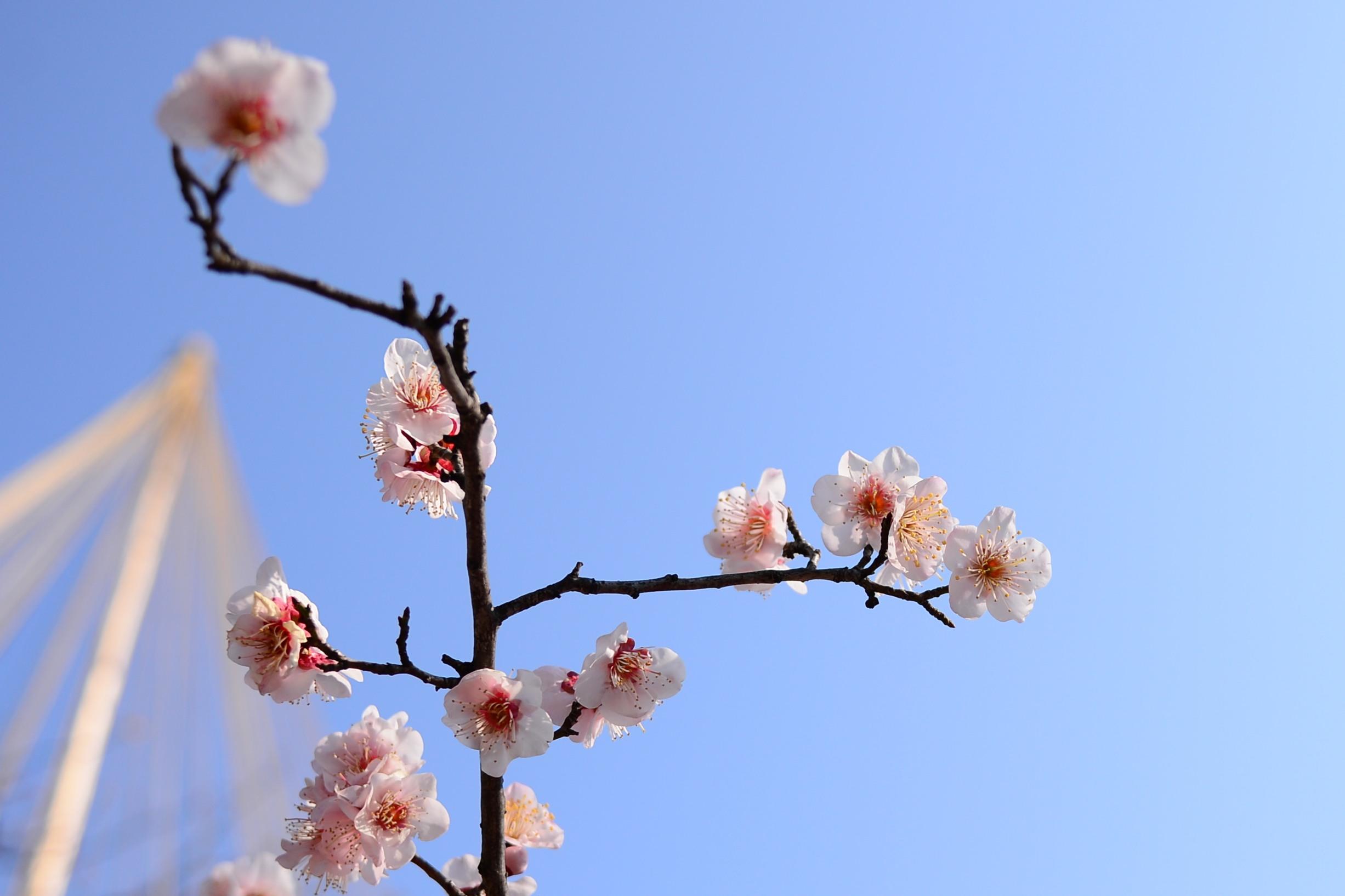 Wallpaper Sunlight Sky Winter Branch Blue Morning Blossoms