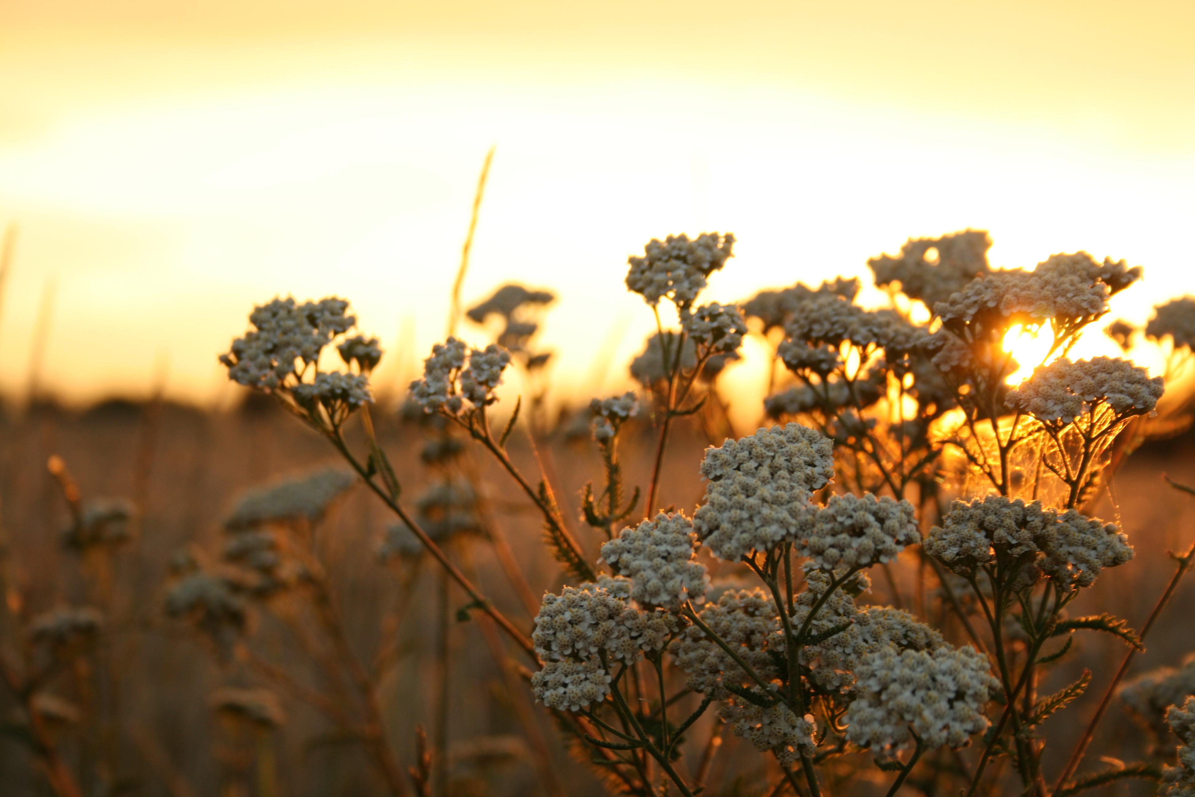 Hintergrundbilder Sonnenlicht Sonnenuntergang Natur