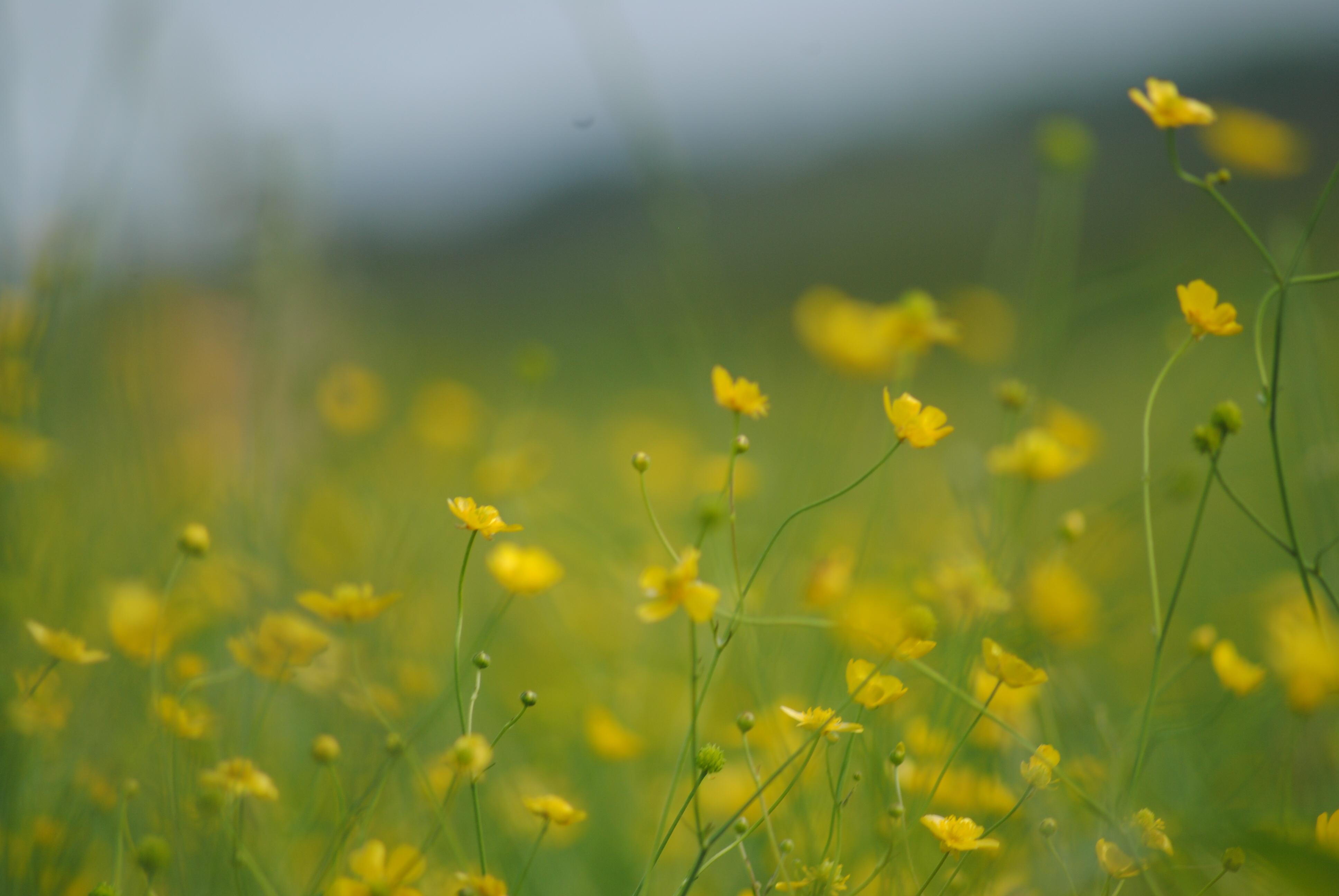 Sognare Fiori Gialli.Sfondi Luce Del Sole Tramonto Fiori Natura Amore Erba