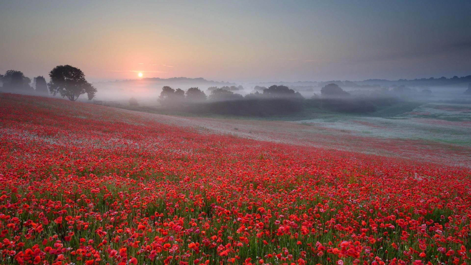 фото цветов на восходе под капельницей, реанимация