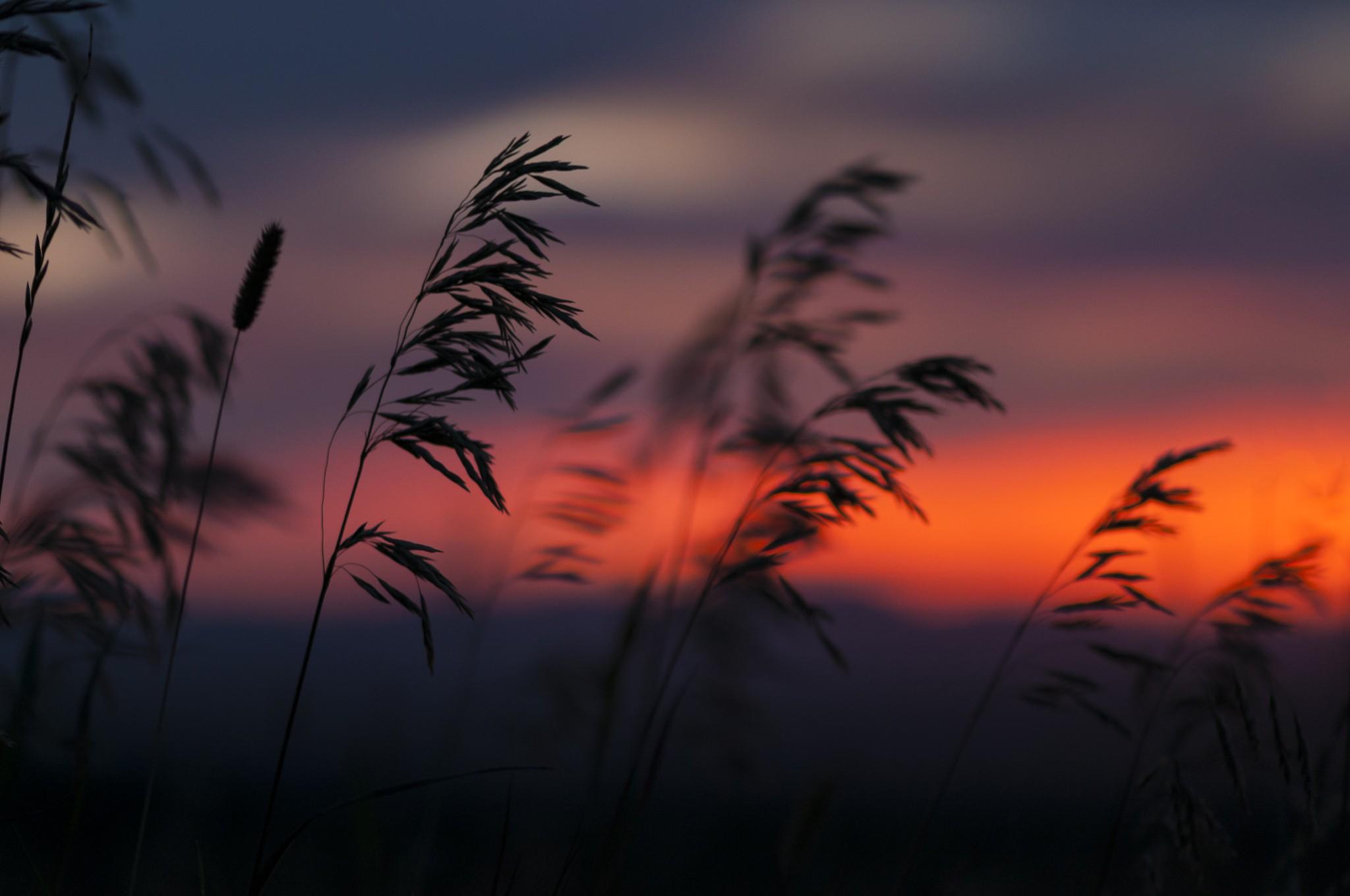 картинки закат и трава купить спутниковый