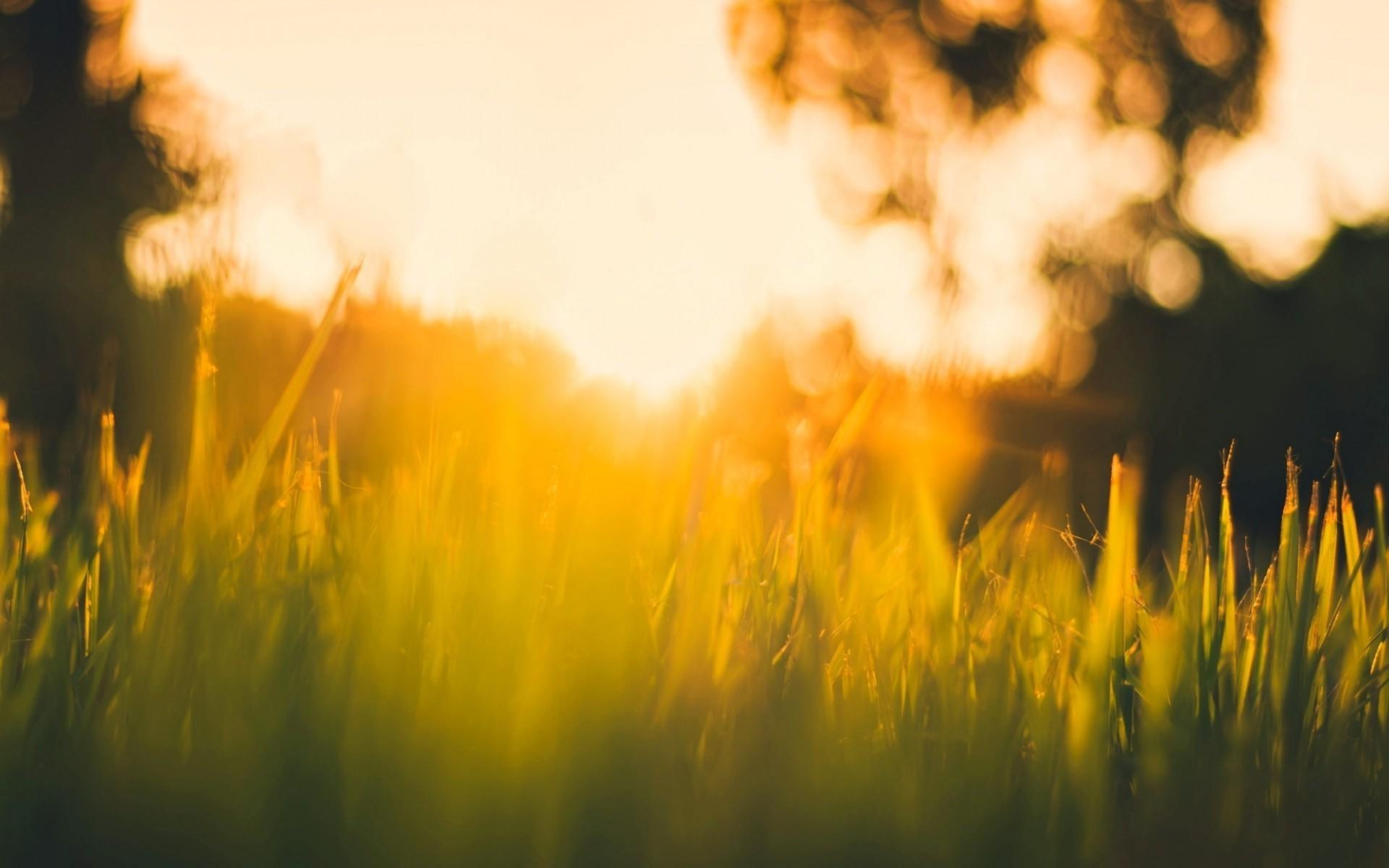 одних лучи солнца на траве картинки одна семья купила