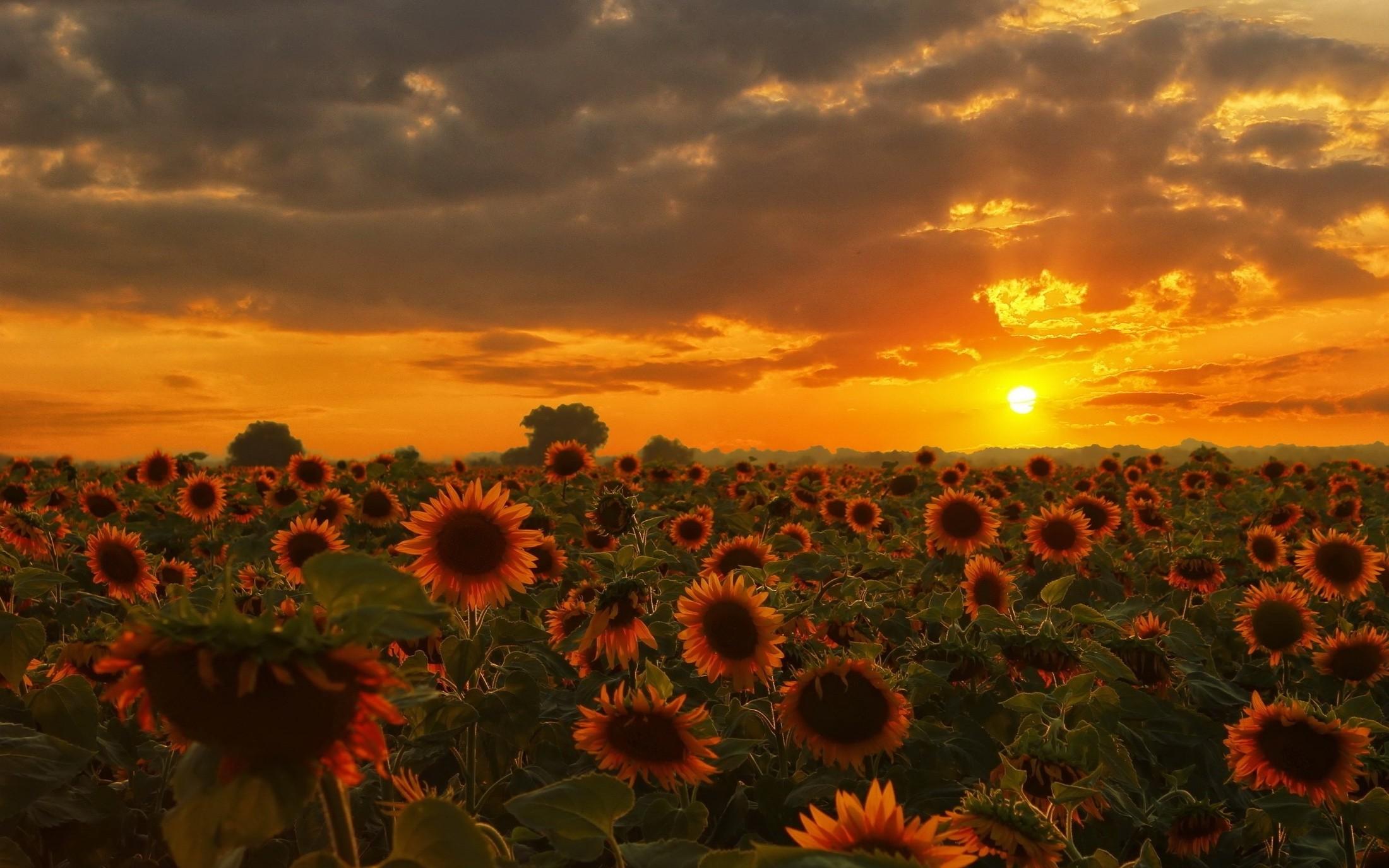 Wallpaper Sinar Matahari Matahari Terbenam Alam Langit