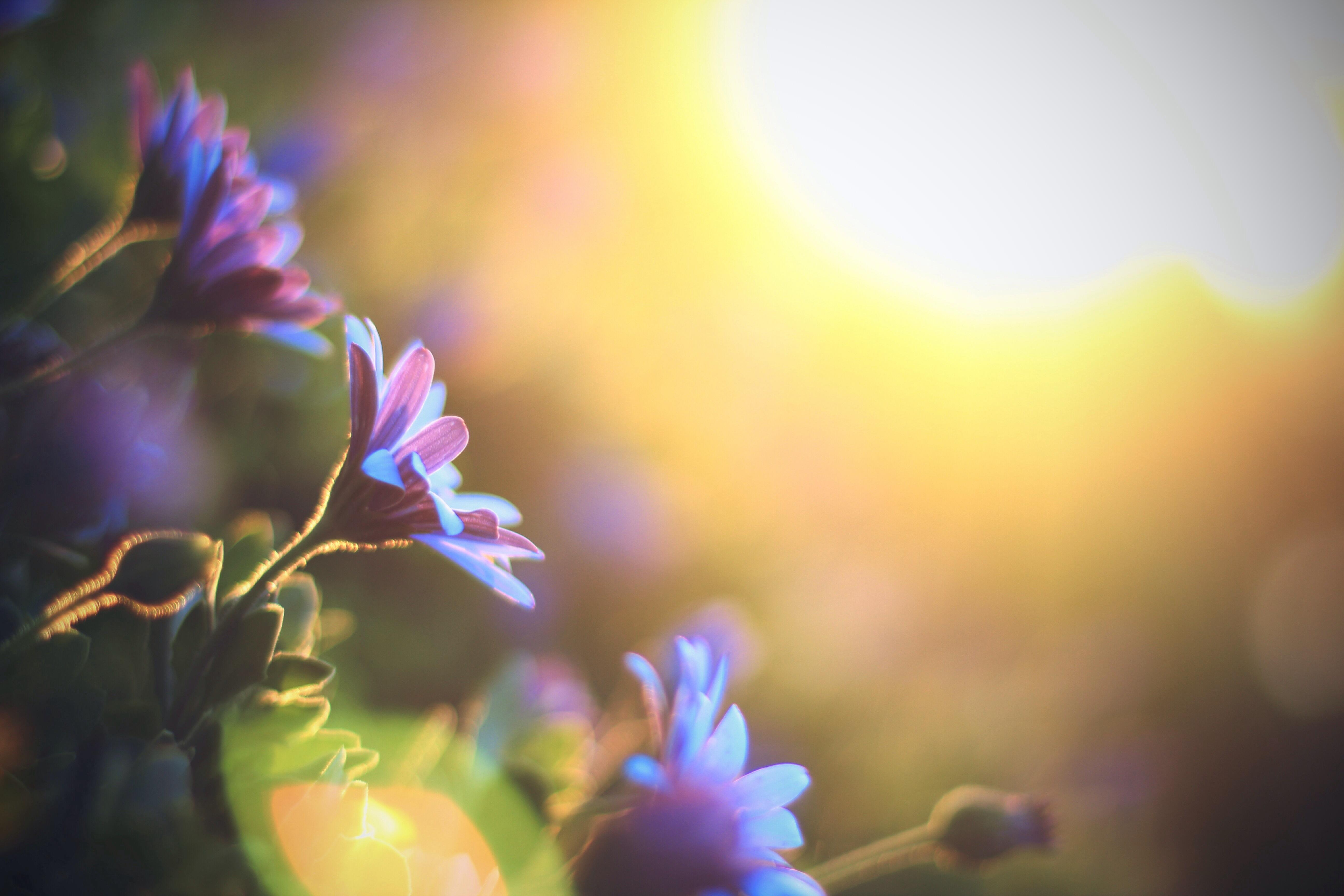 Wallpaper : sunlight, sunset, nature, sky, purple, branch